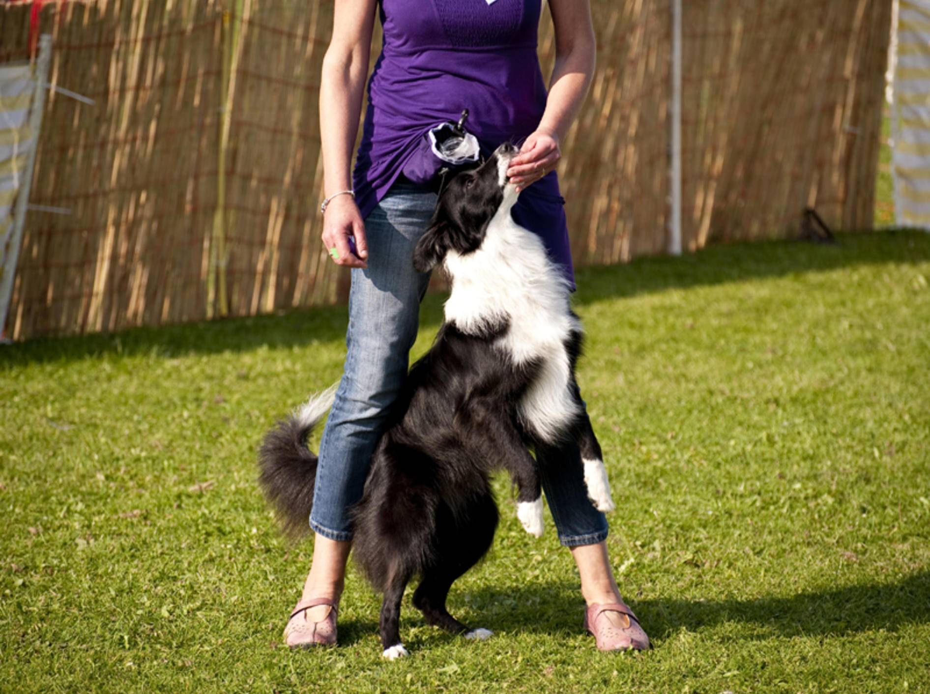 Dog Dancing ist eine Trainingsmethode für Hund und Mensch – Bild: Shutterstock / bluecrayola