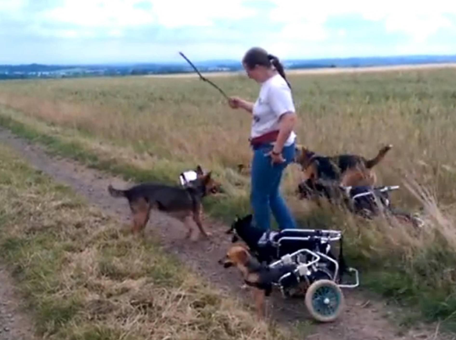 Süße Hunde mit Handicap spielen Stöckchenholen – Bild: Youtube / Gritta Goetz