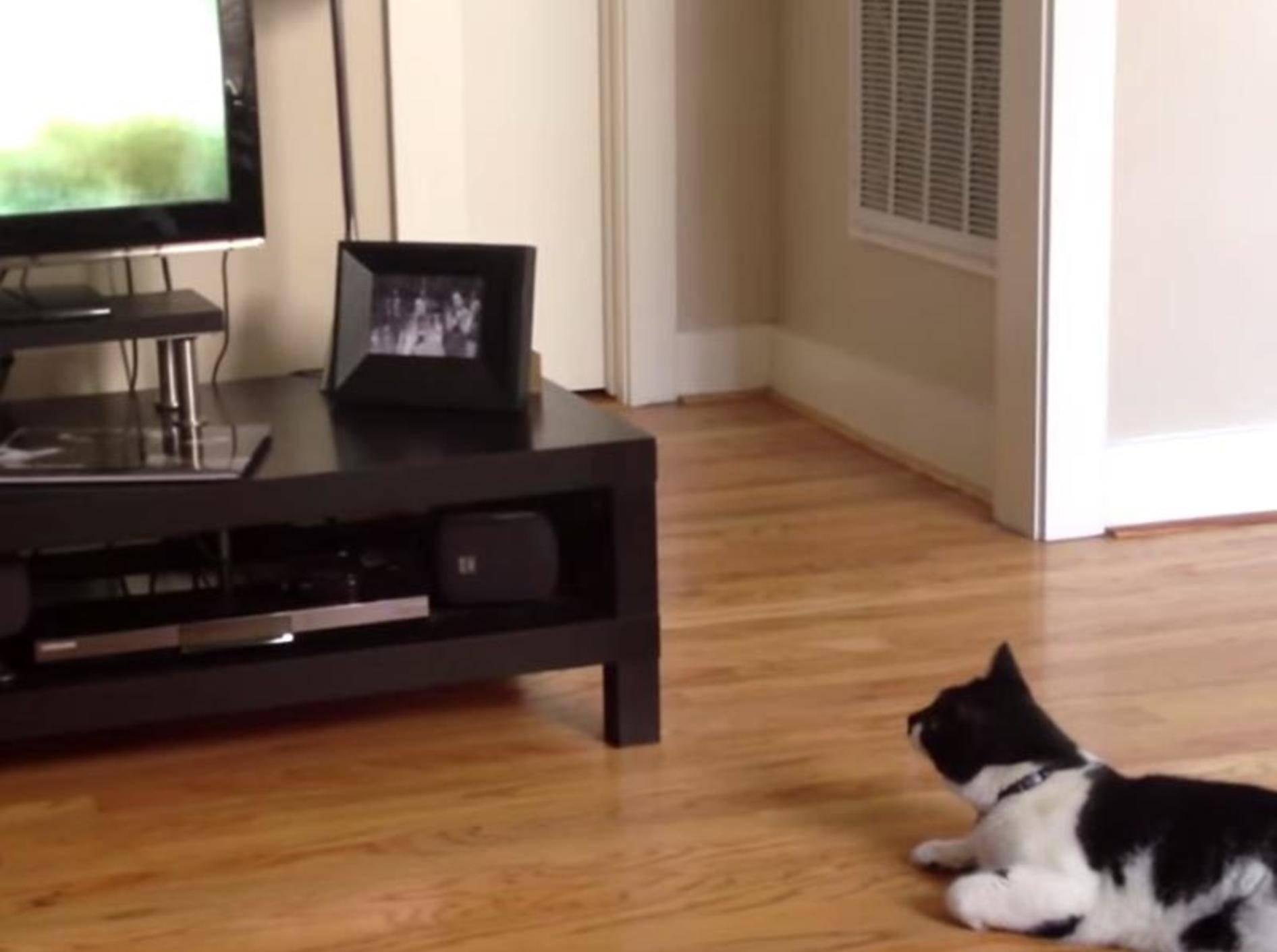 Süße Katze liebt Dokusendungen im TV – Bild: Youtube / CE54R