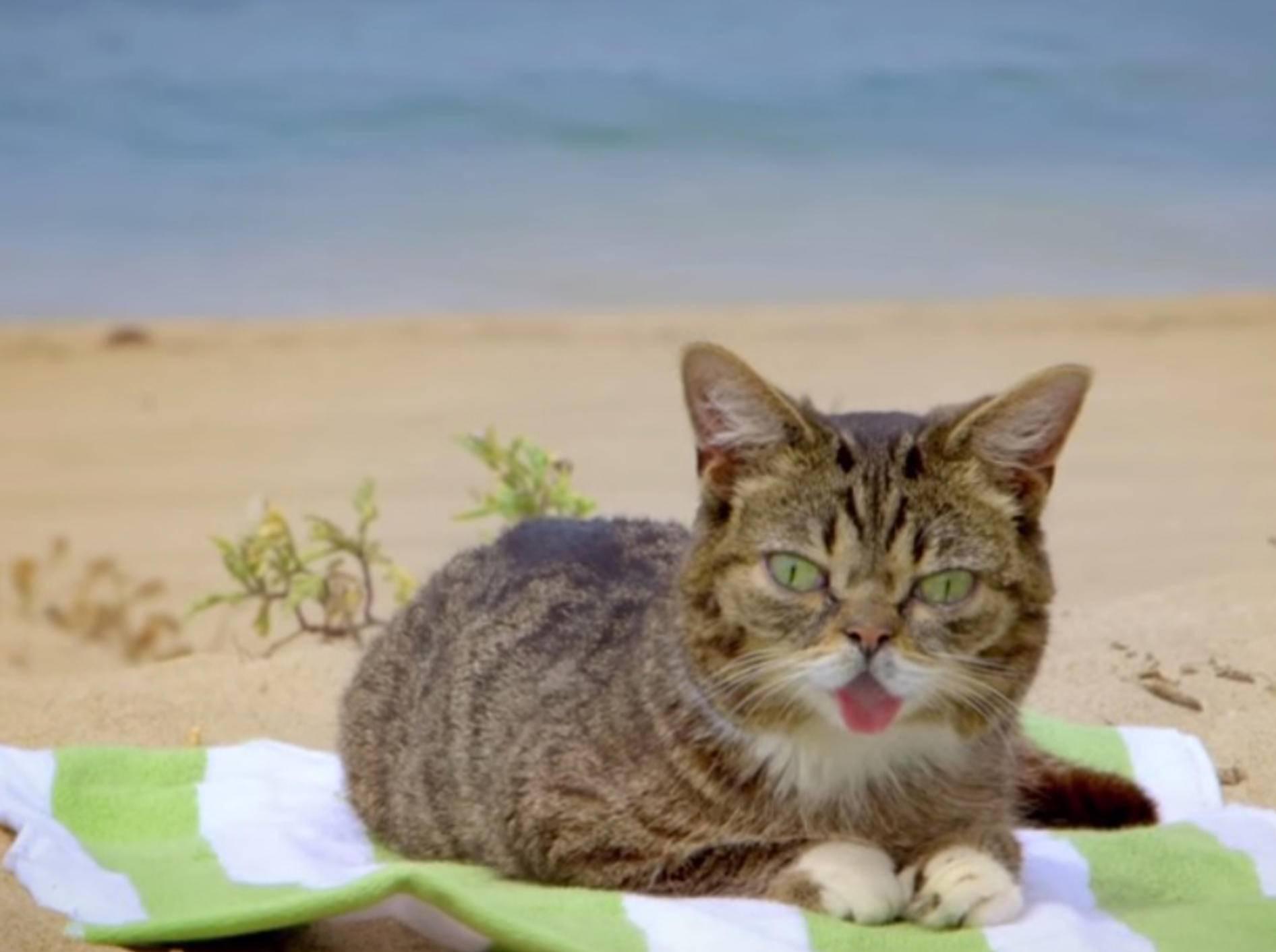 Lil Bub schnurrt sich in Sommerlaune – Bild: Youtube / Lil BUB