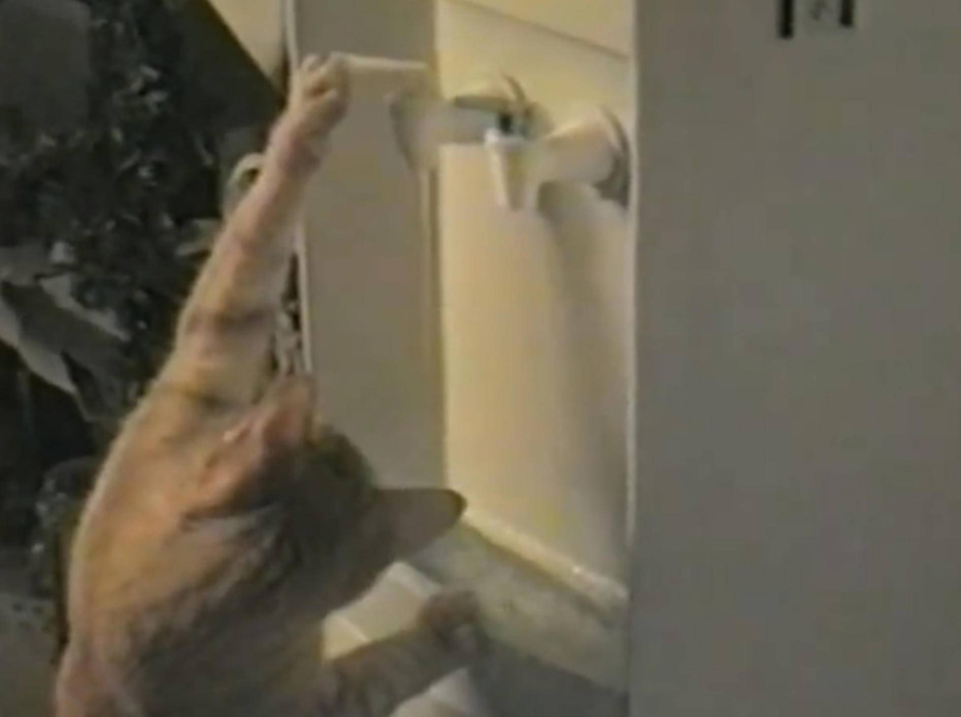 Schlaue Katze benutzt Wasserautomaten – Bild: Youtube / Petsami