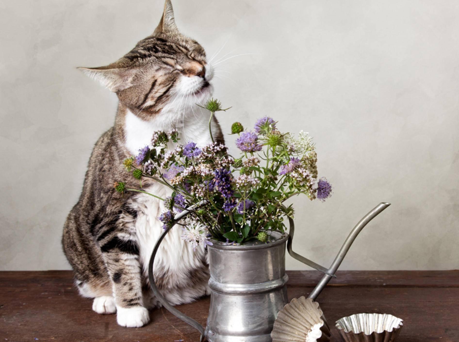 Eine Blume kann durchaus der Auslöser dafür sein, dass eine Katze niest – Bild: Shutterstock: Nailia Schwarz