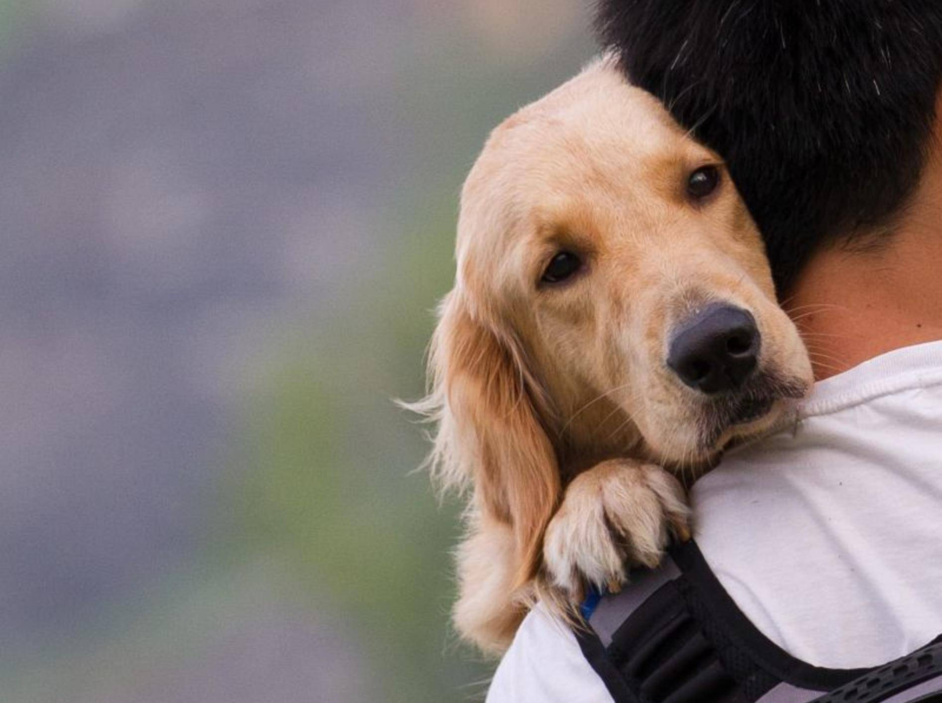 Wichtig bei Verdacht auf Zwingerhusten: Der Gang zum Tierarzt – Bild: Shutterstock / Sinseeho
