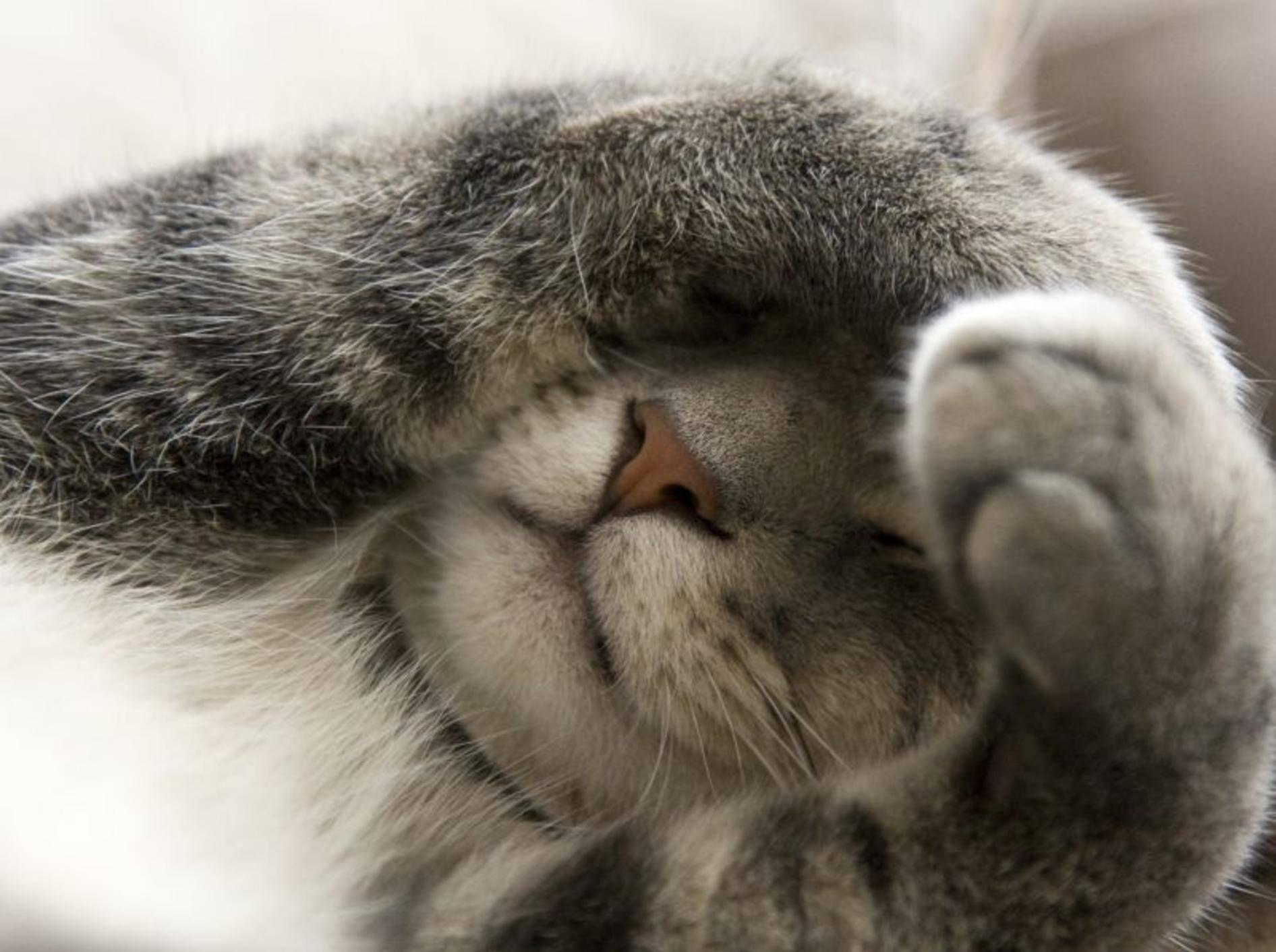 Schattenplätze für Katzen an heißen Tagen – Bild: Shutterstock / Jim Lopes