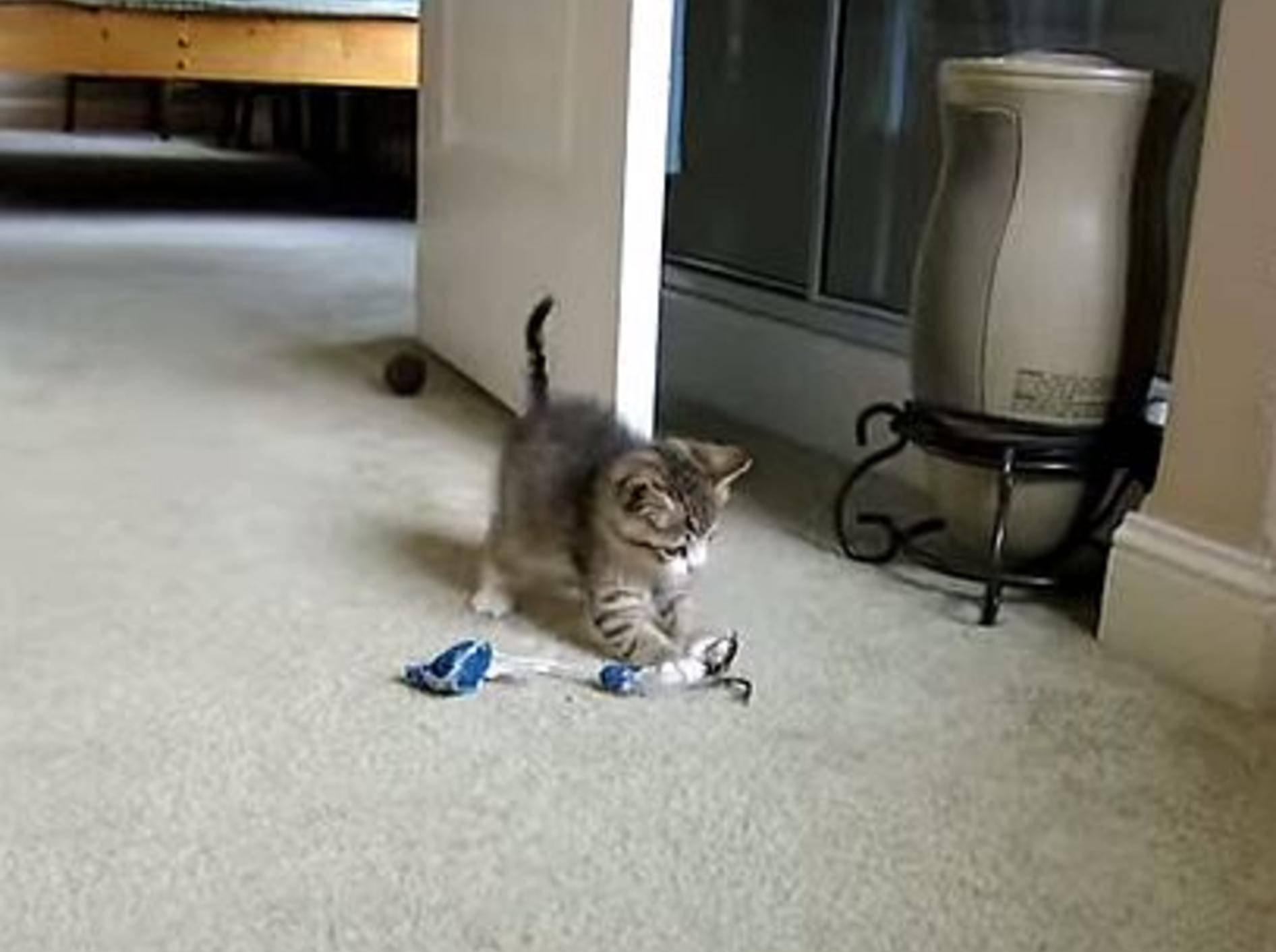 Einfach süß: Spielspaß mit dem blinden Kätzchen Quirky – Bild: Youtube / vgiannangelo