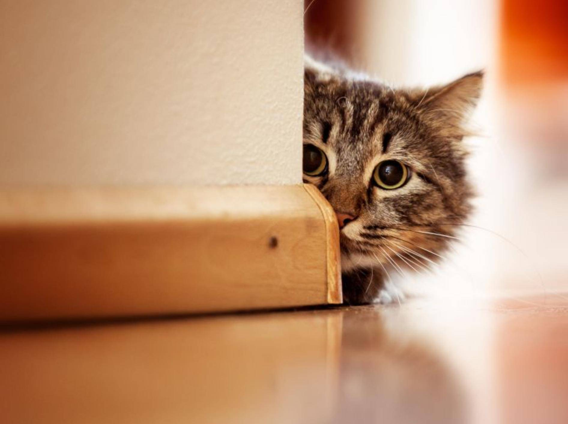 Spannendes Spielzeug zum Toben für Katzen – Bild: Shutterstock / Joop Snijder Photography