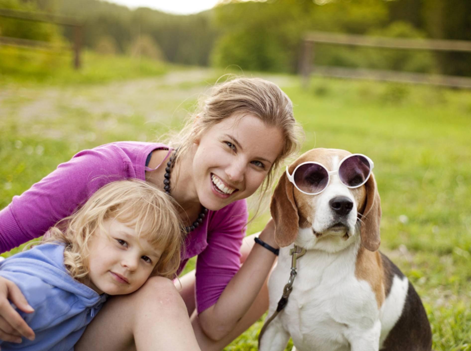 Der Beagle ist ein beliebter Familienhund mittlerer Größe – Bild: Shutterstock / Halfpoint