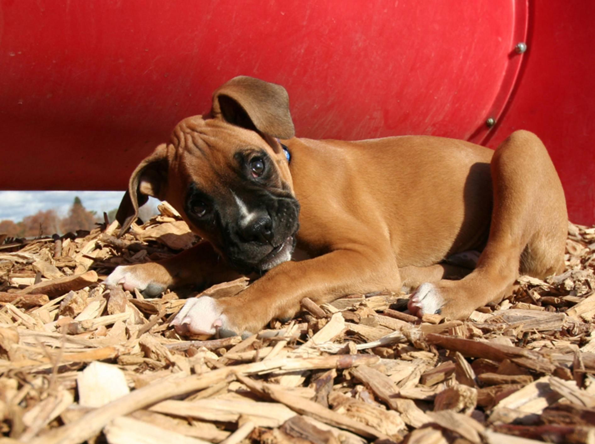 Wer kann diesem Hundeblick schon widerstehen? – Bild: Shutterstock / Annette Shaff