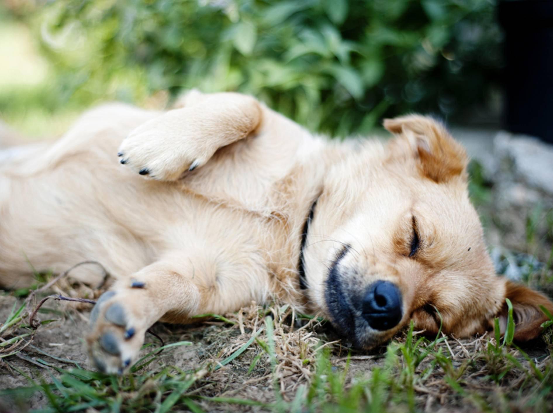 Gegen Langeweile bei Hunde gibt es einige Tipps – Bild: Shutterstock / Halfpoint