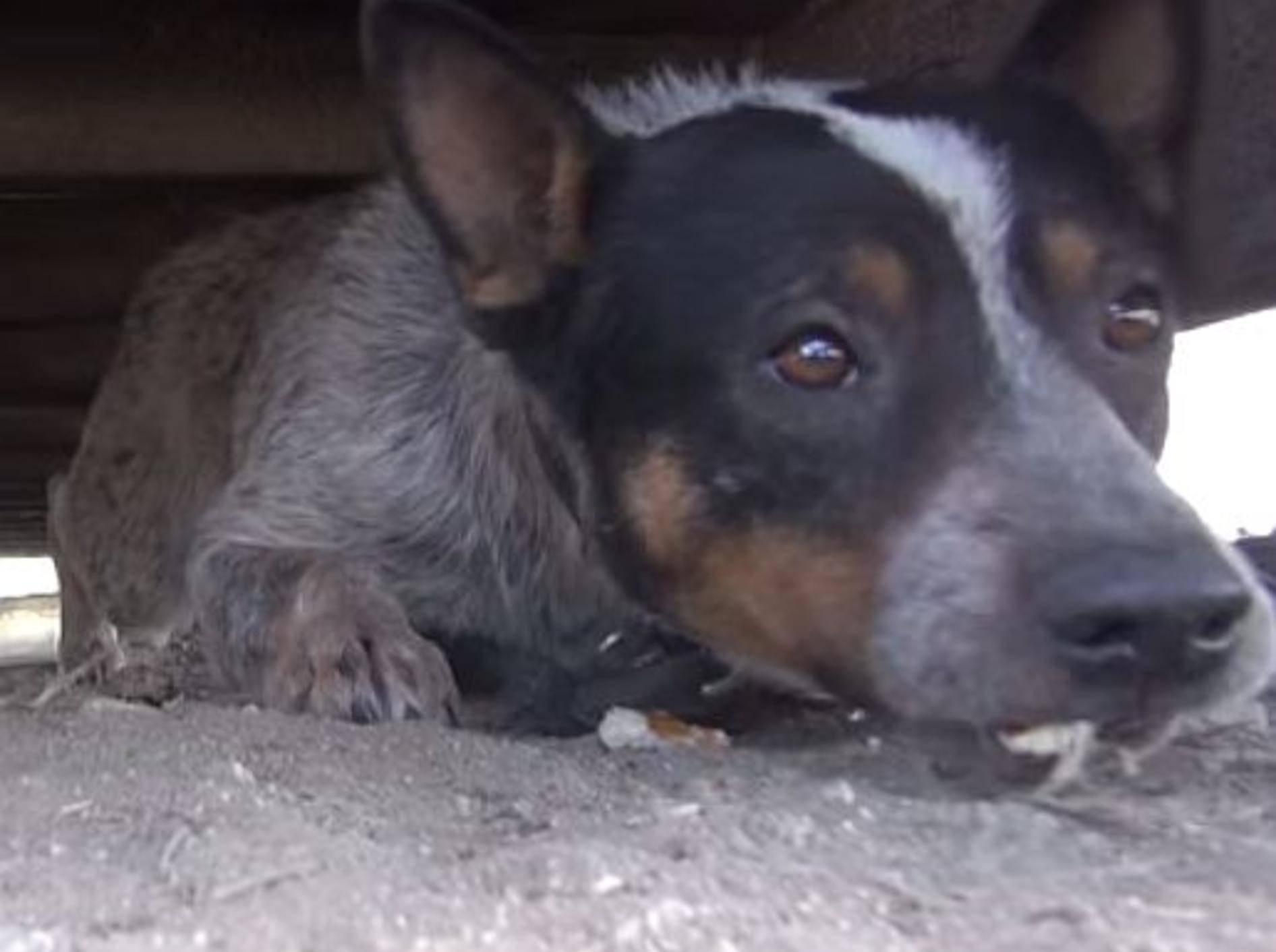 Ergreifend: Tierschutz rettet verängstigten Hund – Bild: Youtube / Eldad Hagar
