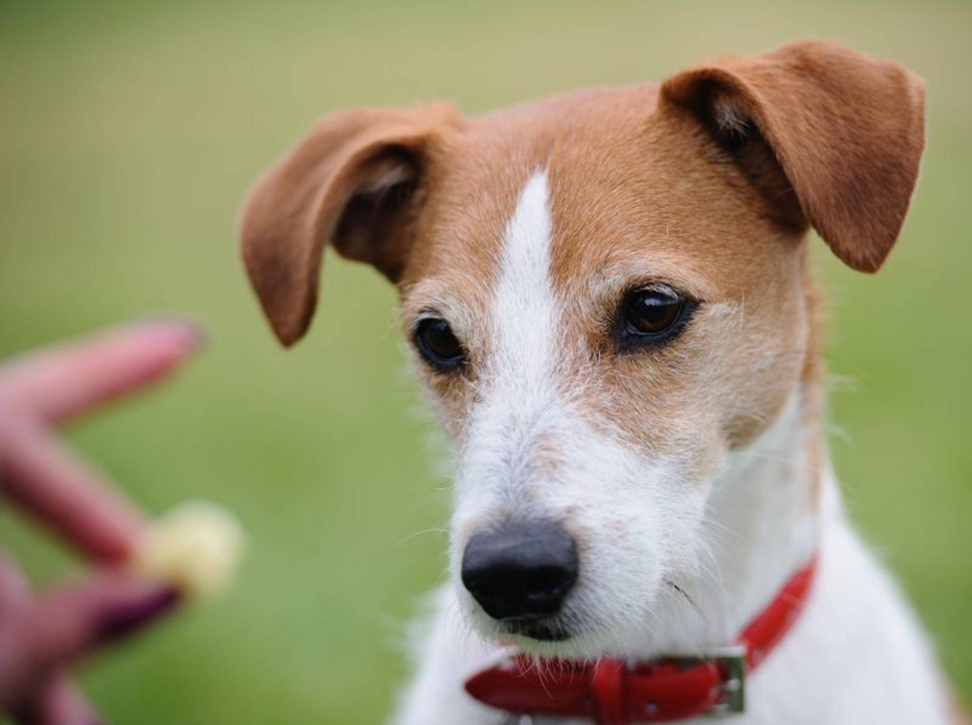 Futterbeutel für den Spaziergang und den Hundesport – Bild: Shutterstock / godrick