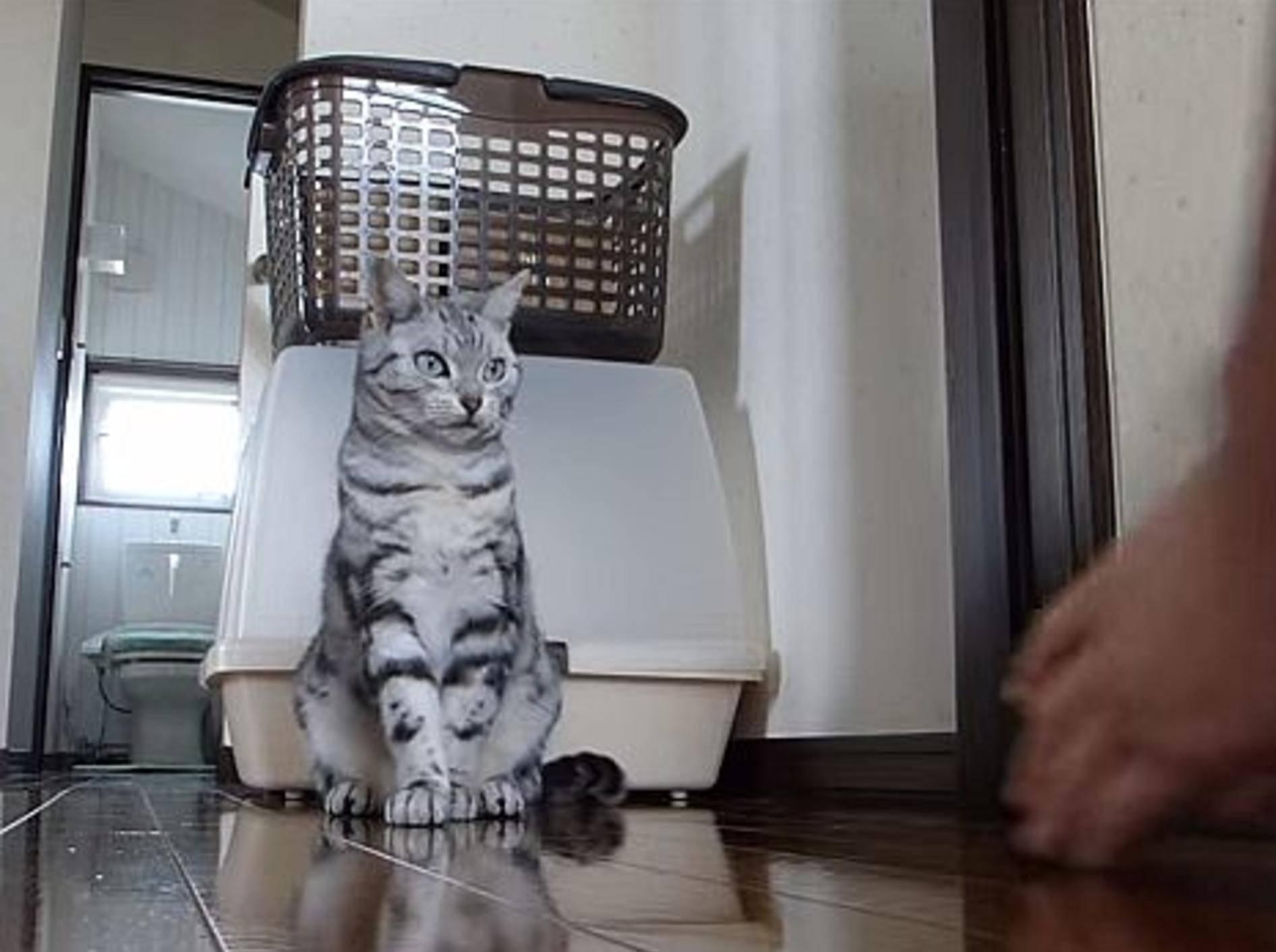 """Süße Katze: """"Sport? Ich mach mit!"""" – Bild: Youtube / Zf003971"""