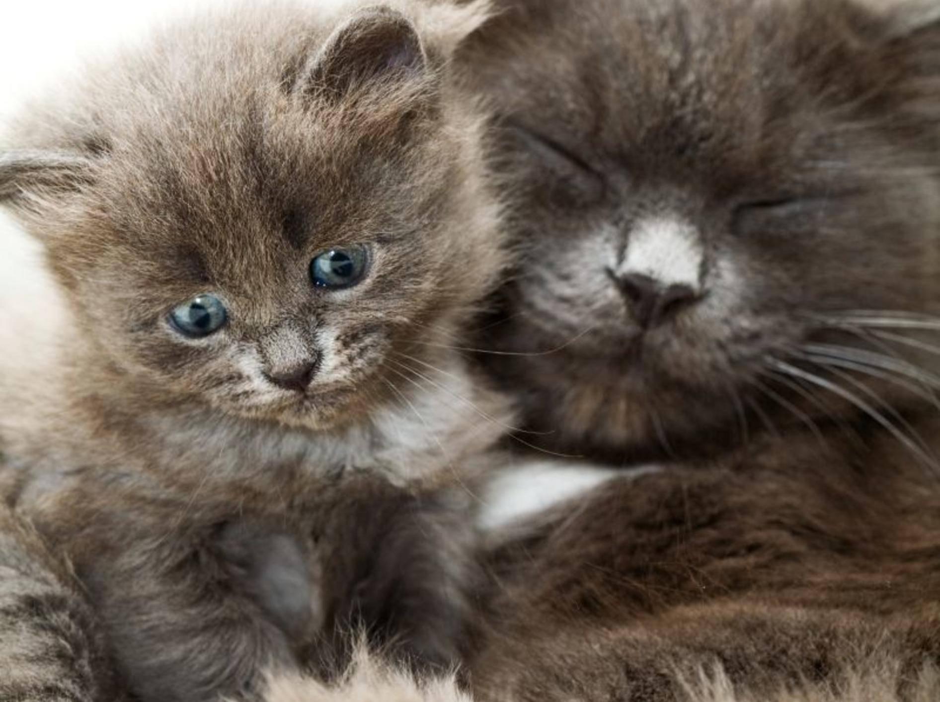 Flauschig und kuschelig: Diese süße Katzenfamilie macht den Anfang – Bild: Shutterstock / Larisa Lofitskaya