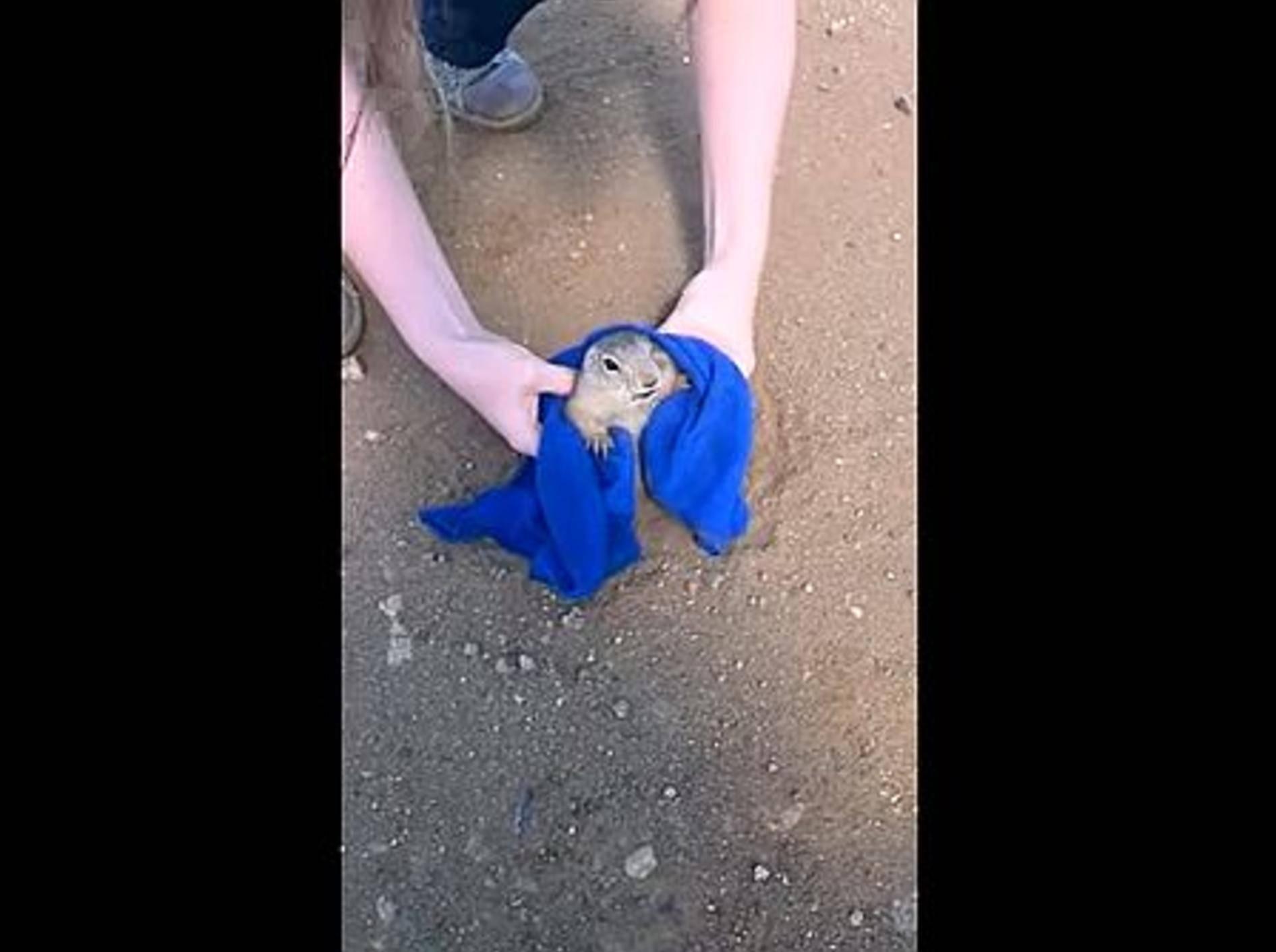Paar rettet einen Präriehund – Bild: Youtube / PsihAL