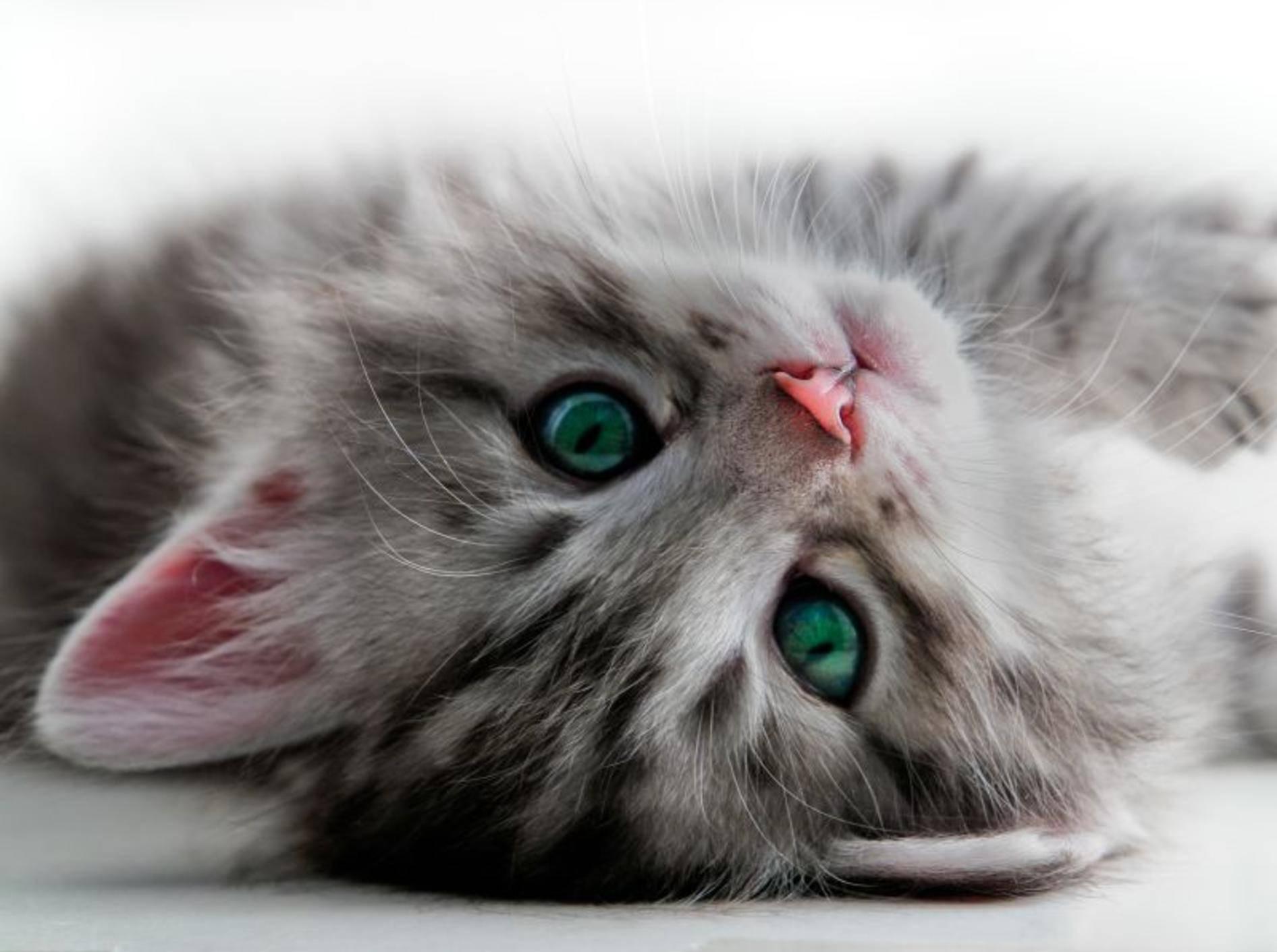 Praktisch: Automatischer Wasserspender für Katzen – Bild: Shutterstock / Orhan Cam