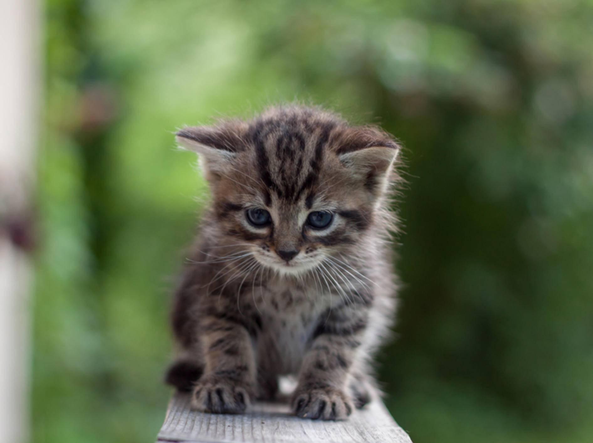 Diesem kleinen Minitiger scheint da etwas nicht so ganz geheuer zu sein... – Bild: Shutterstock / Andrzej Sliwinksi