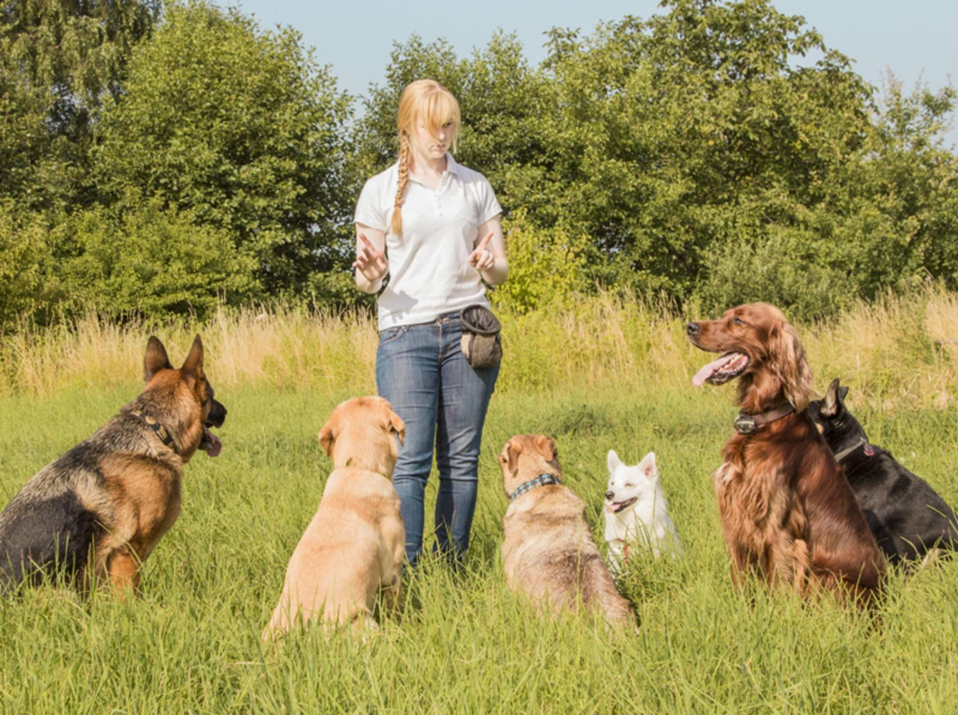 Die Kompetenz des Trainers sollte ein wichtiges Kriterium bei der Auswahl der Hundeschule sein – Bild: Shutterstock / mezzotint