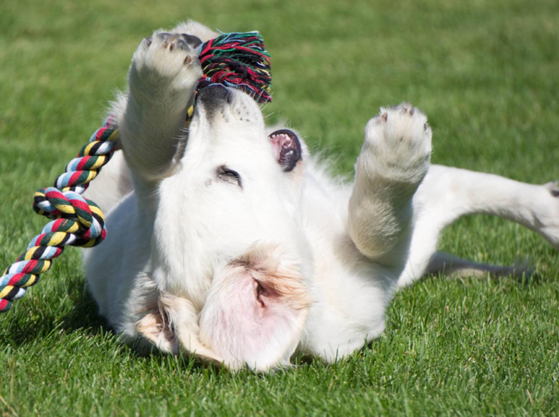 Vier tolle Spielzeugideen mit Tau für Hunde – Bild: Shutterstock / Erkki Alvenmod