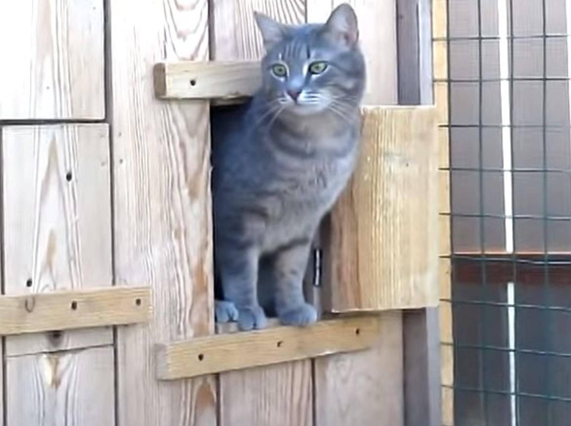 Süße kleine Katzenüberraschung – Bild: Youtube / ignoramusky