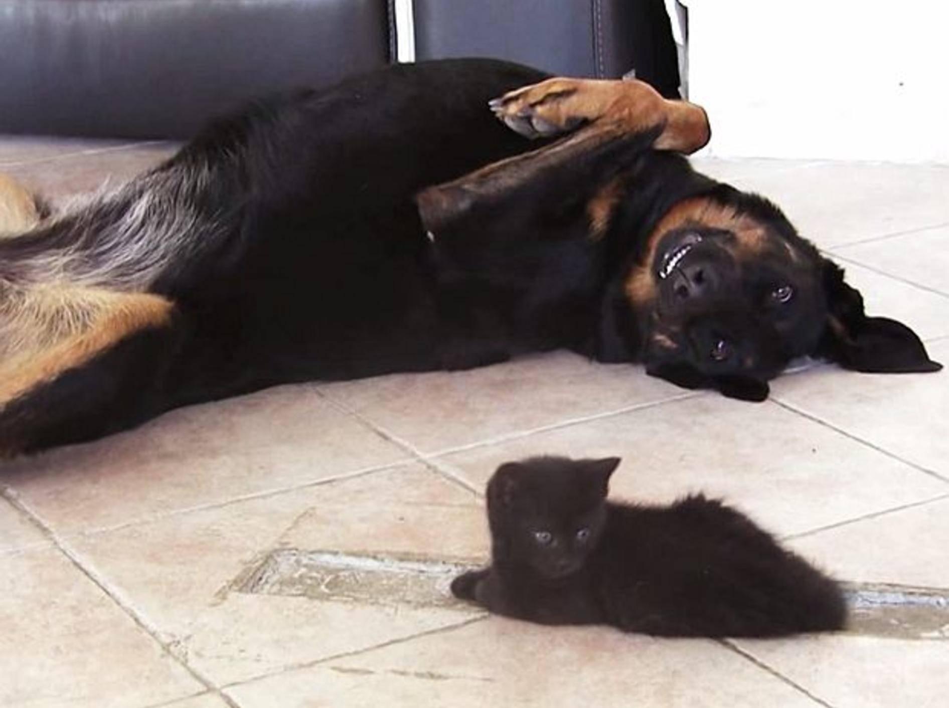 """Kleine Katze: """"Hey, beachte mich doch mal!"""" – Bild: Youtube / Stephanie Valentin"""