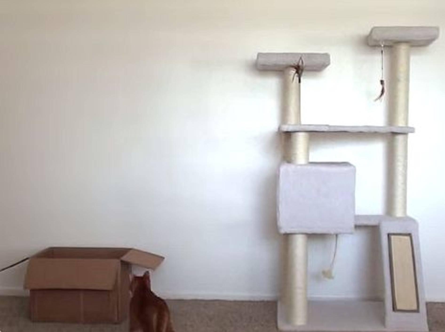 Süße Stubentiger geben Einführung in Katzenlogik – Bild: Youtube / Cole and Marmalade