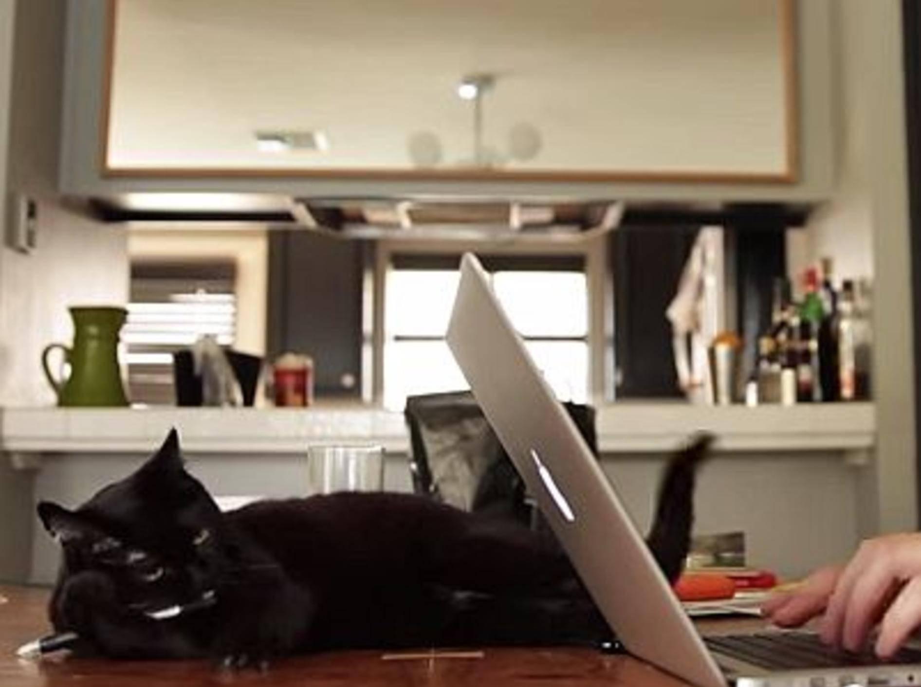 Vor und nach dem Katzenkauf – Bild: Youtube / BuzzFeedVideo