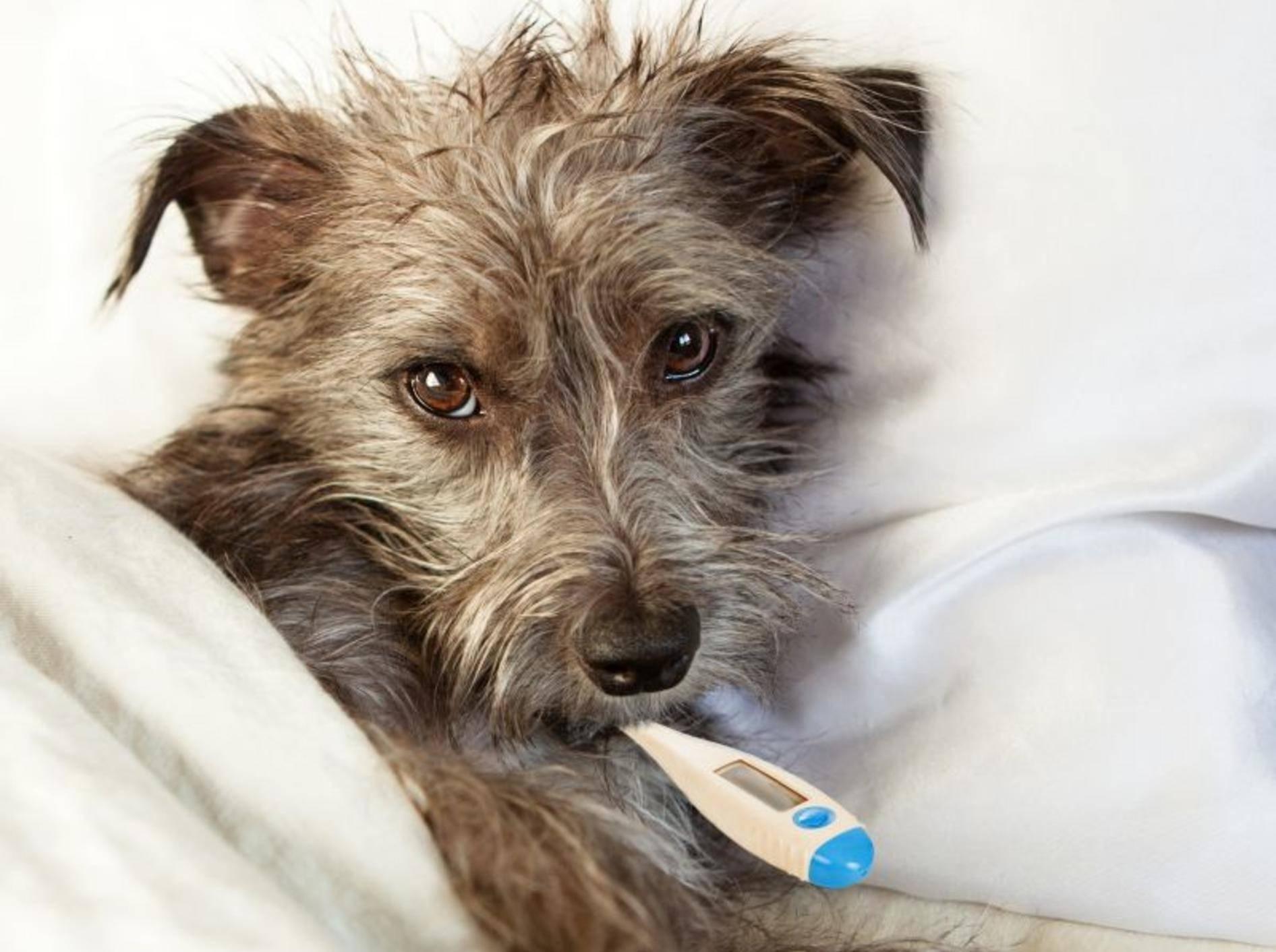 Hohes Fieber gehört zum Beispiel zu den möglichen Ursachen für akute Niereninsuffizienz – Bild: Shutterstock / Susan Schmitz