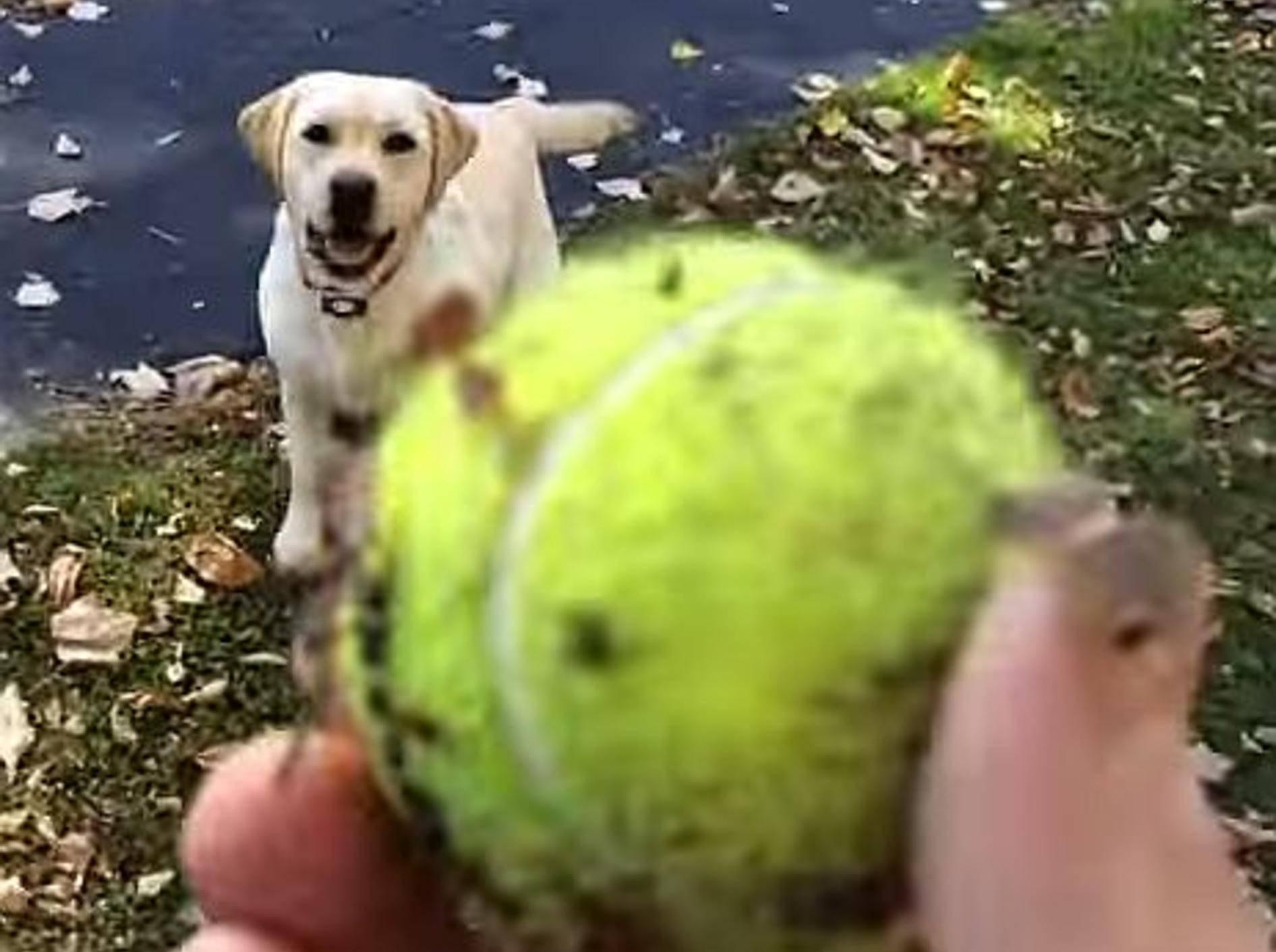 Süßer Hund: Ballspaß in riesigem Laubhaufen – Bild: Youtube / Jody Hartman