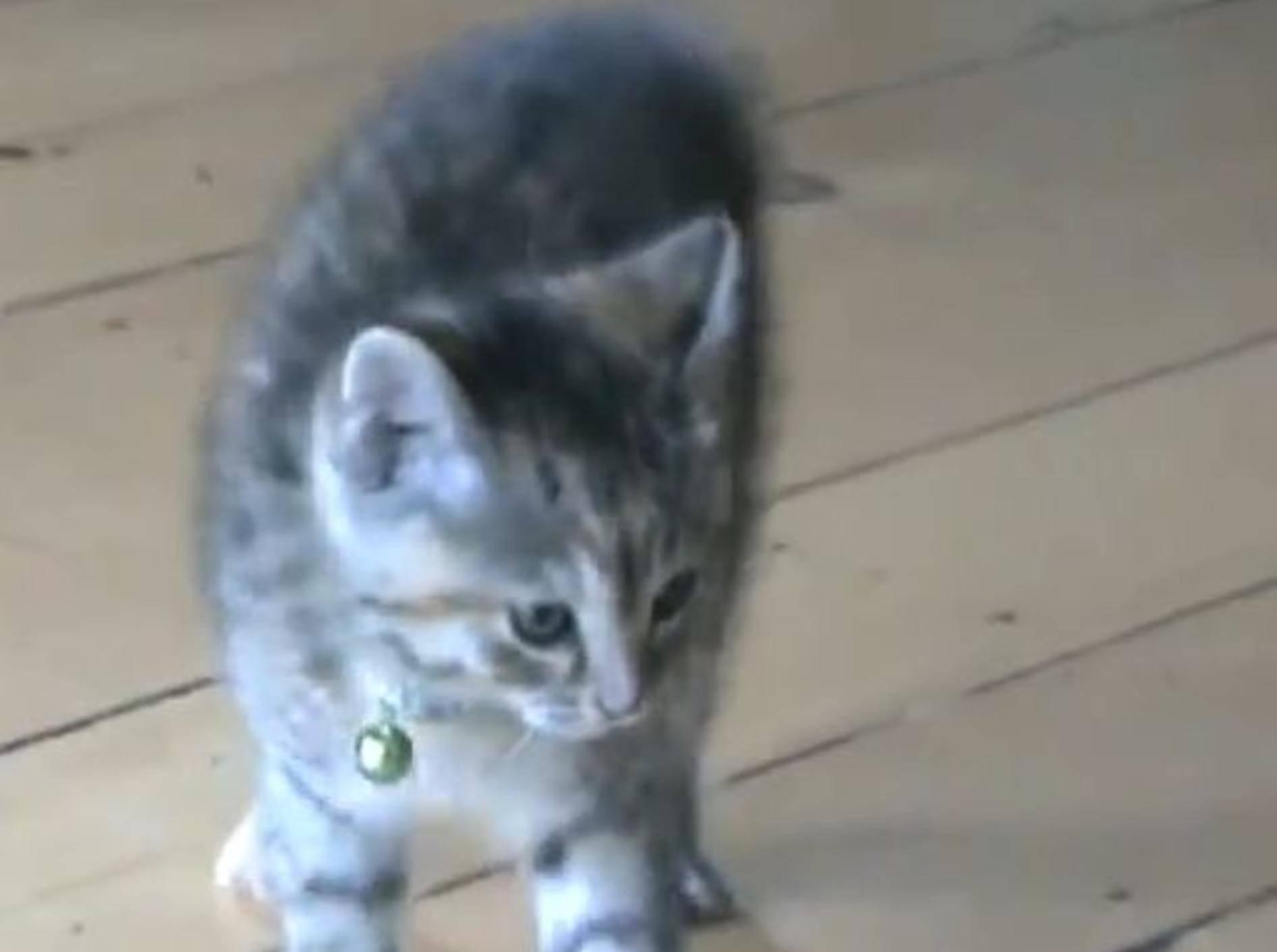 Freche Katze spielt beim Toben verrückt – Bild: YouTube / metocco