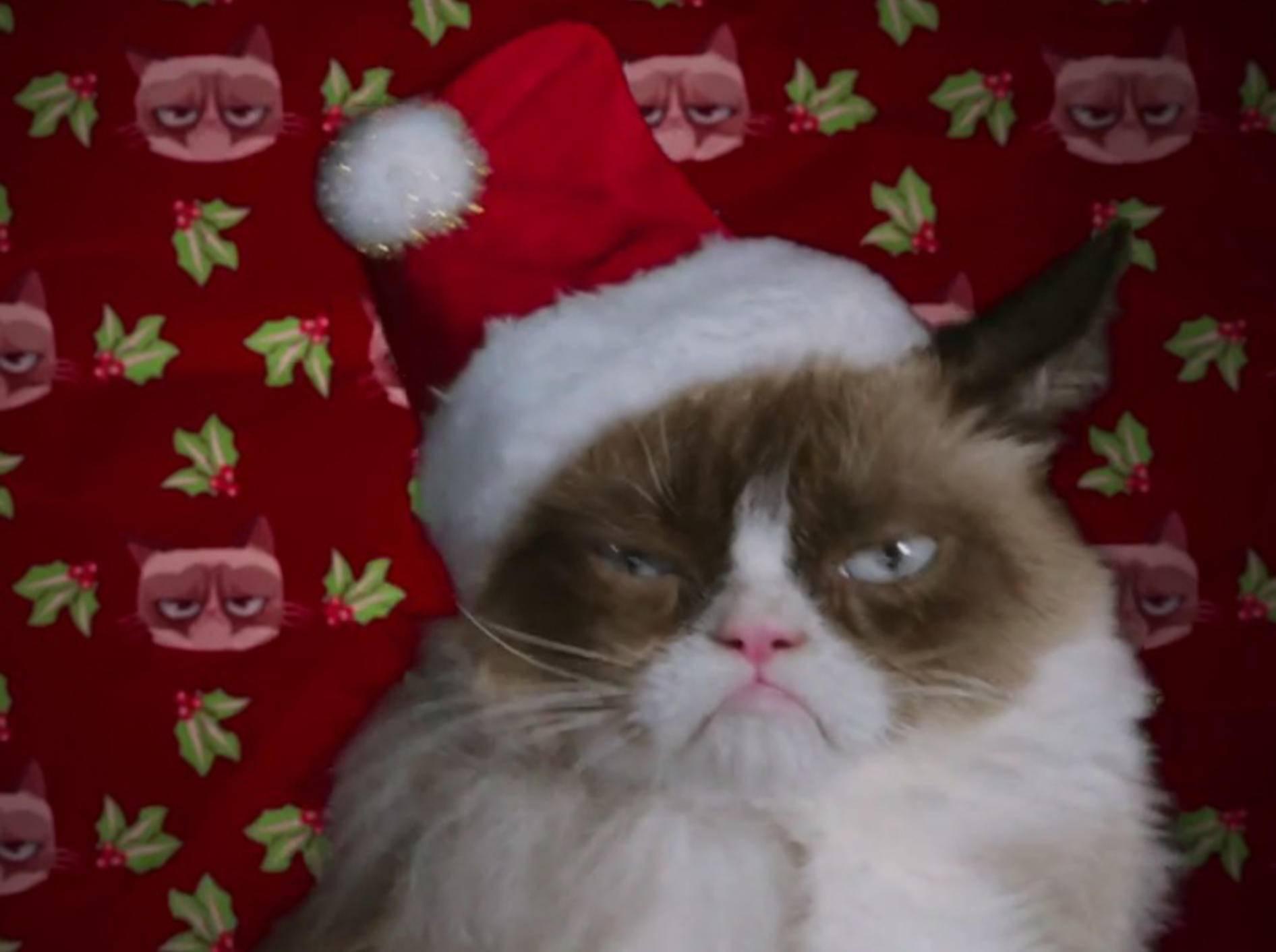 """Grumpy Cat feiert """"das schlimmste Weihnachten aller Zeiten"""" – Bild: Youtube / Lifetime"""