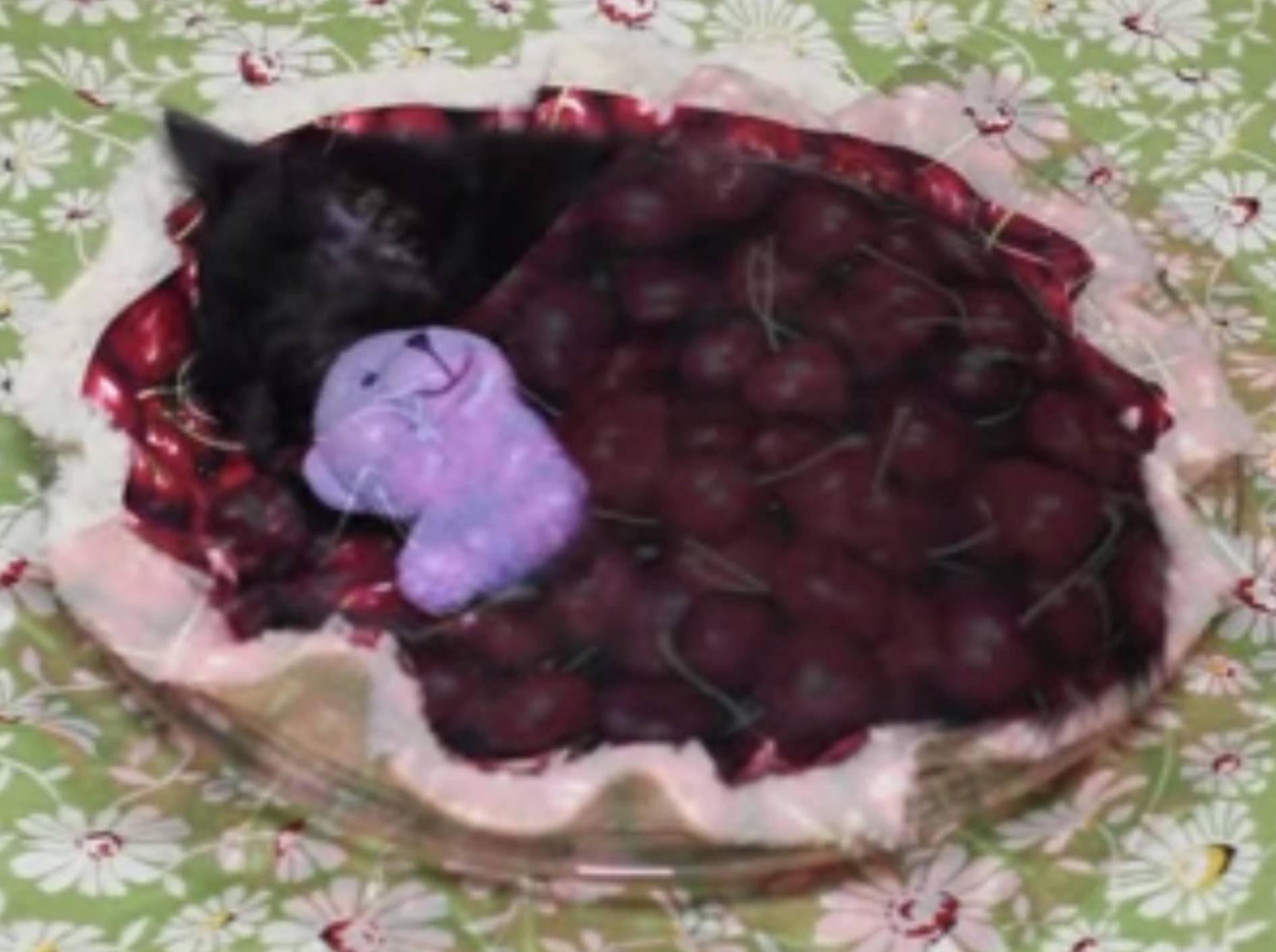 Liebe Katze hat das gemütlichste Bett der Welt – Bild: Youtube / Kitty Cat Bliss