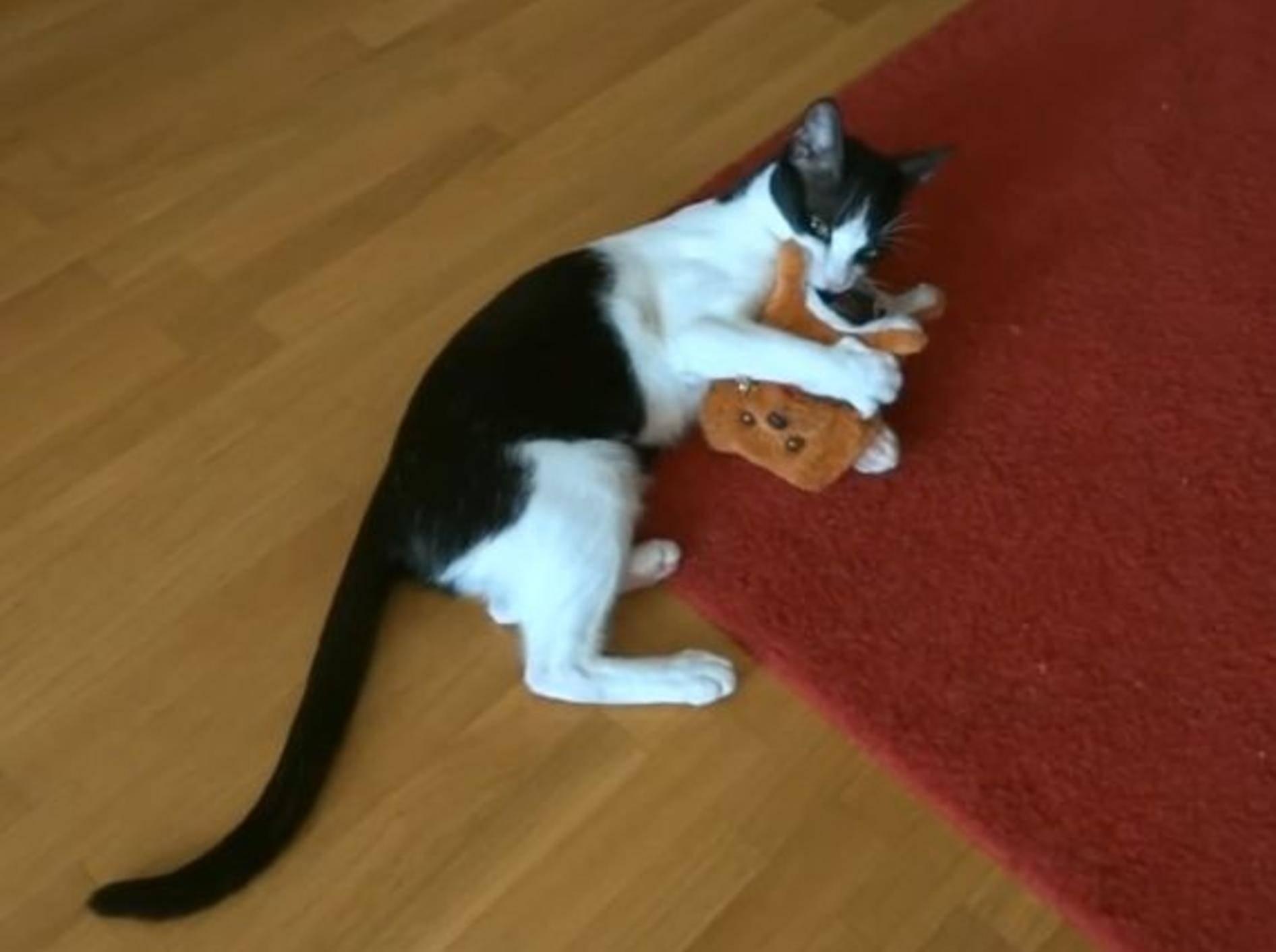 Freche Katze beim Spielen: Duell mit Roboterhund – Bild: YouTube / Fabulous Mr. Pug