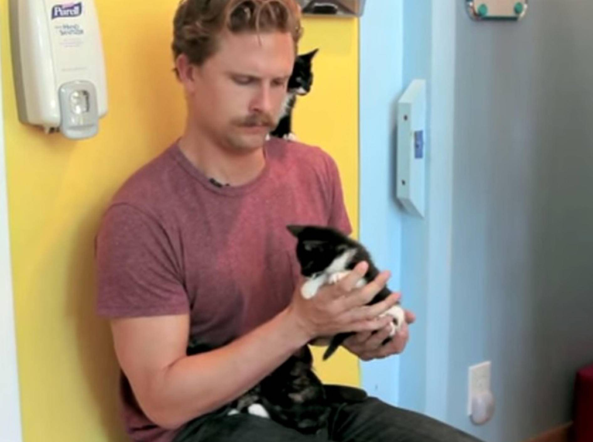 Große Männer – winzige Kätzchen – Bild: Youtube / BuzzFeedVideo