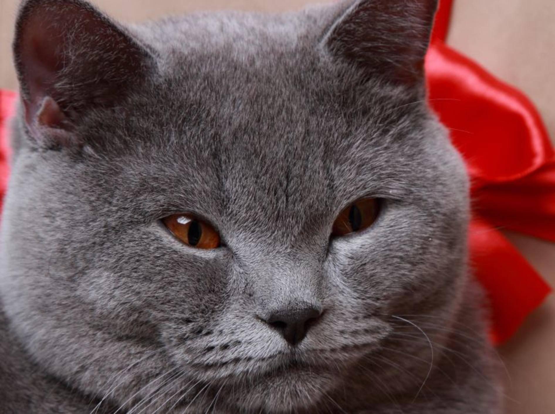 Die Weihnachtszeit naht: Adventskalender für Katzen – Bild: Shutterstock / Maryna Kulchytska