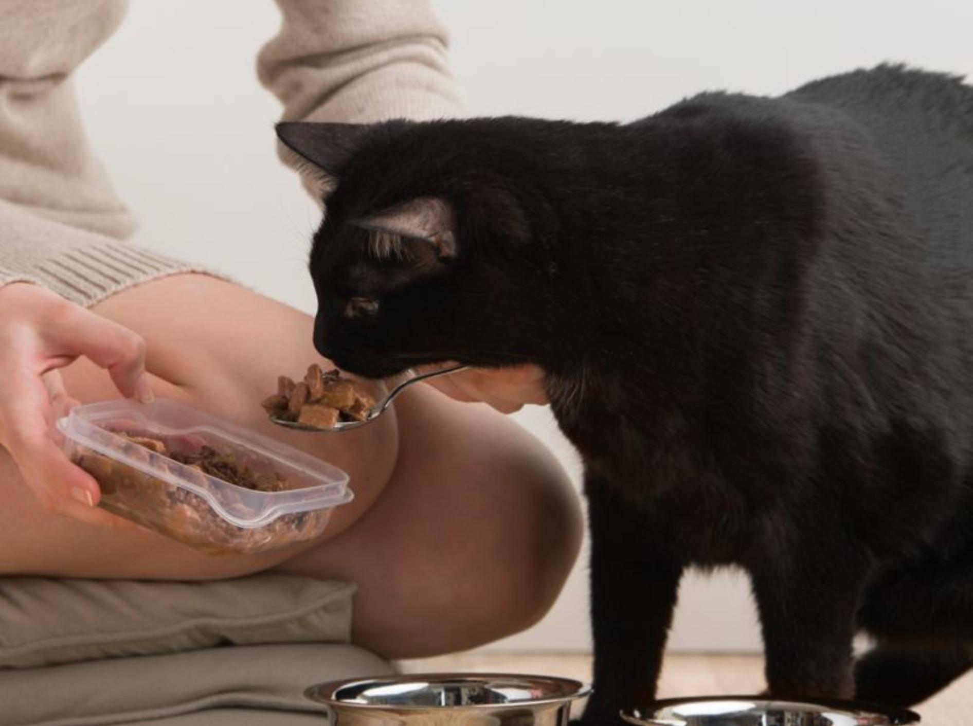Eine zugelaufene Katze sollten Sie nur unter bestimmten Bedingungen füttern – Bild: Shutterstock / Hasloo Group Production Studio