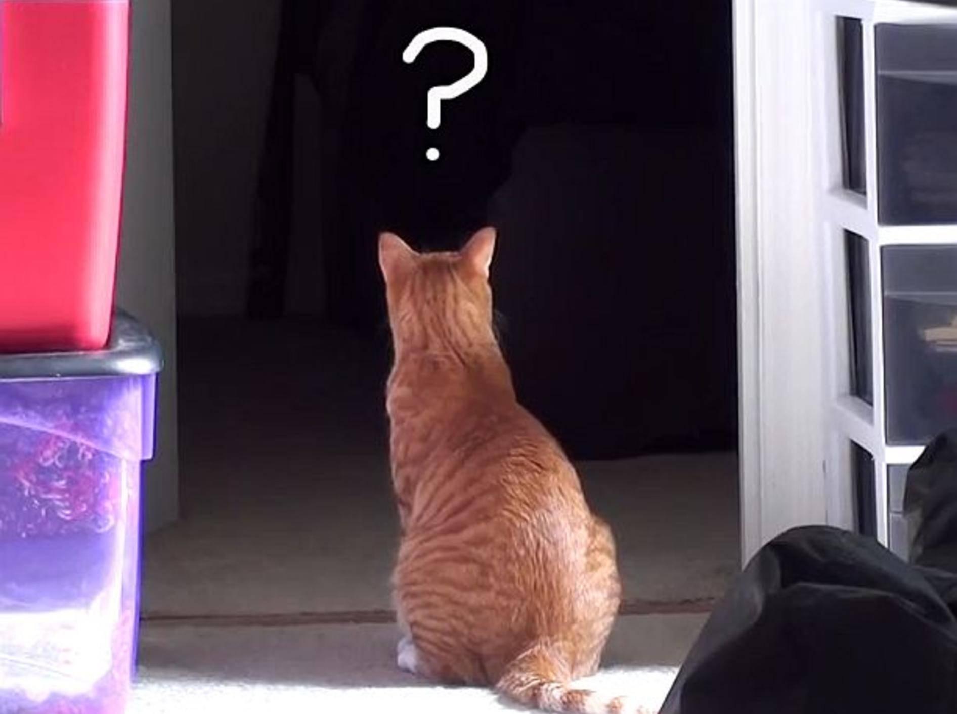 Wie Katzen die Welt sehen – Bild: Youtube / Cole and Marmalade
