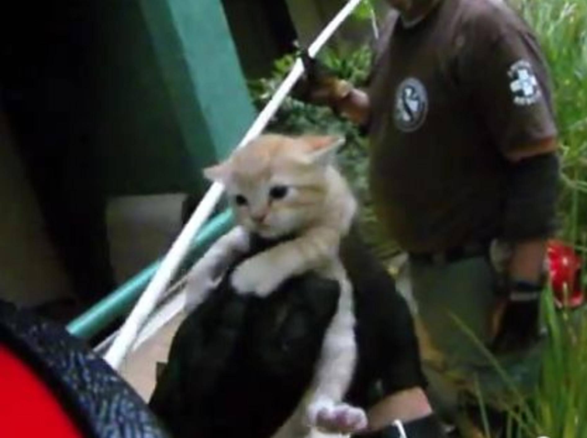 rotes-katzenbaby-wird-gerettet
