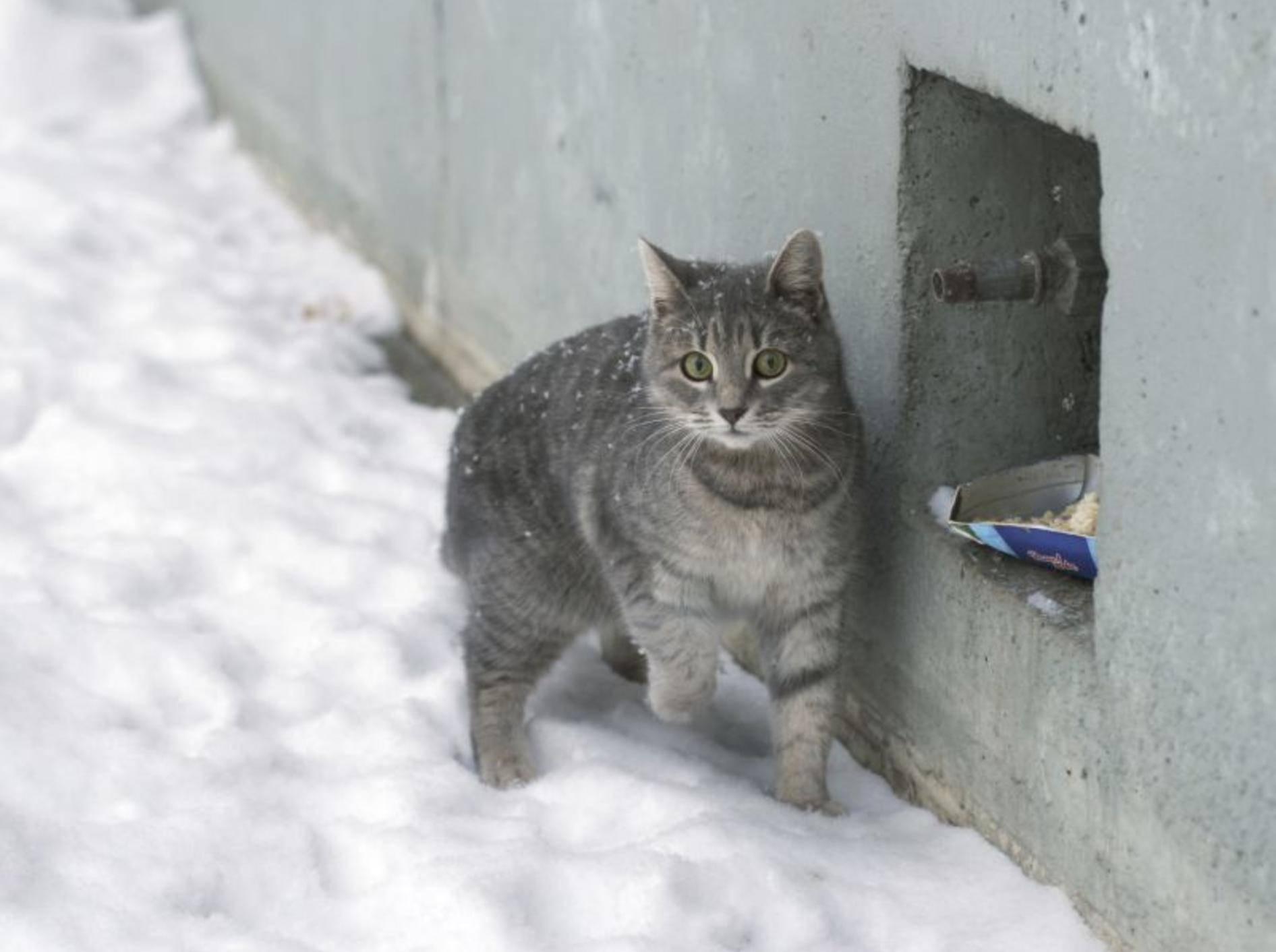 Streunende Katzen haben es im Winter schwer – Bild: Shutterstock / Alexey Khromushin