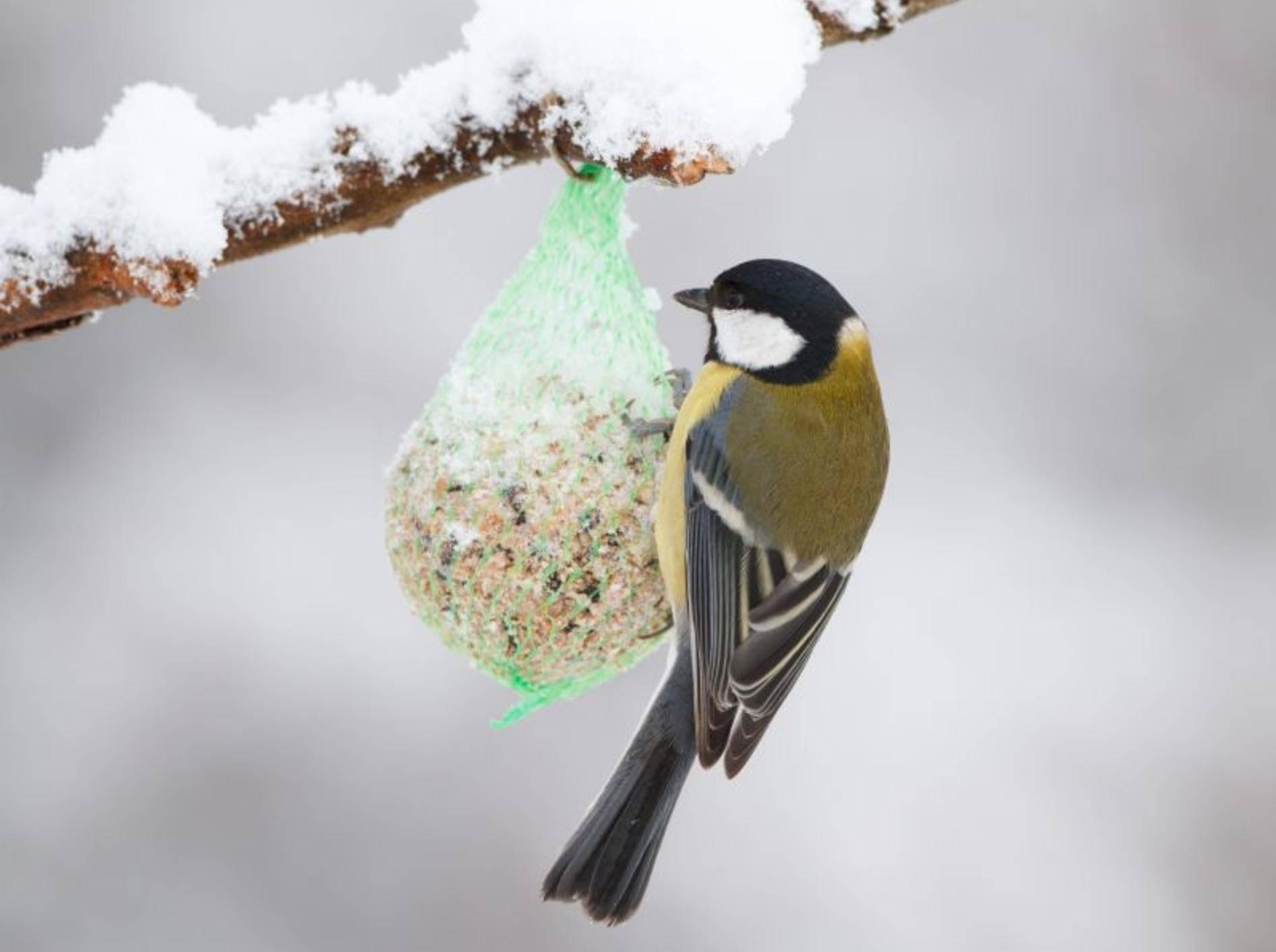 Nicht vergessen: Vogelfutter für den Winter – Bild: Shutterstock / wim claes