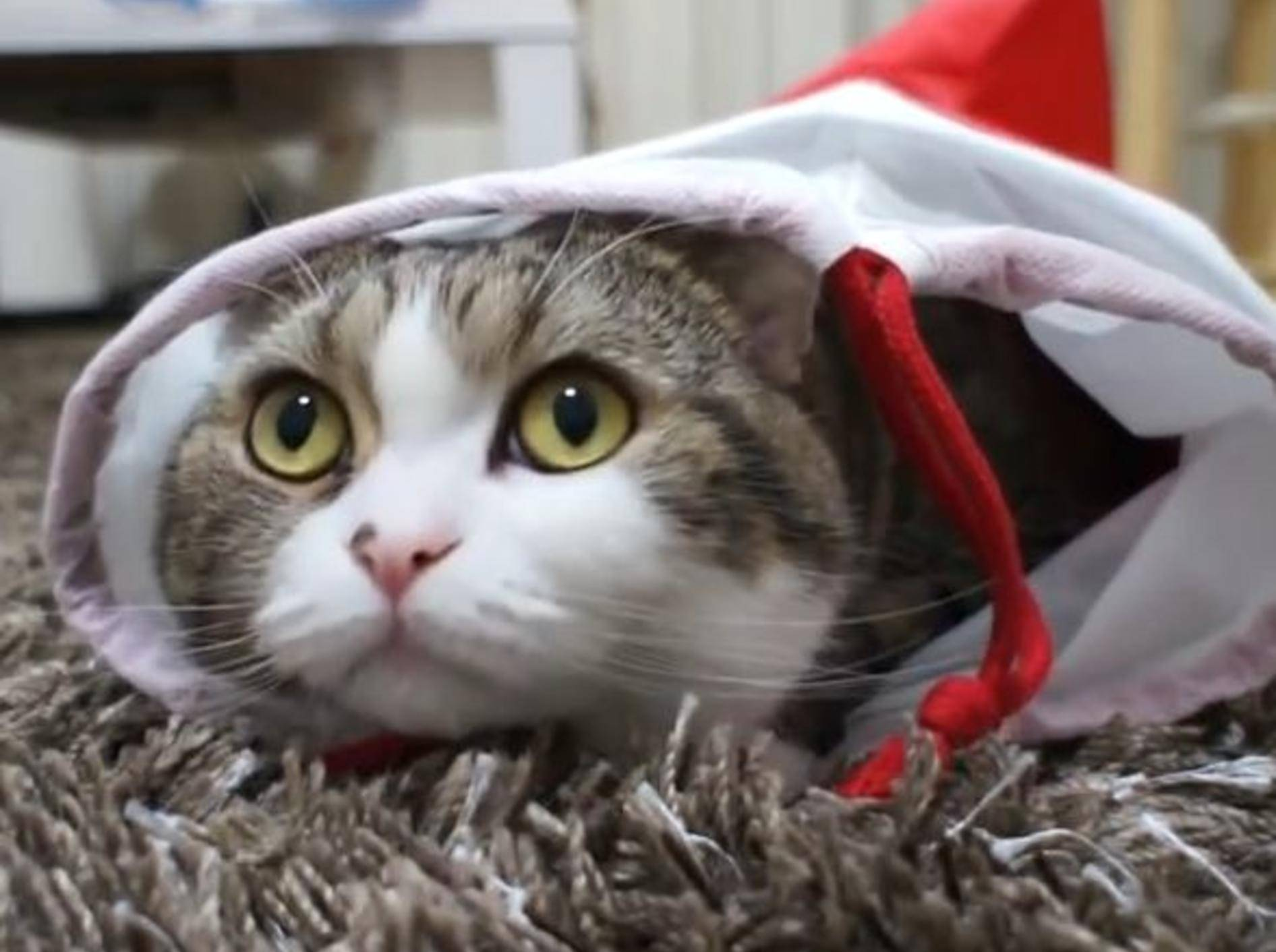Kater Maru inspiziert Nikolaus-Stiefel – Bild: YouTube / mugumogu