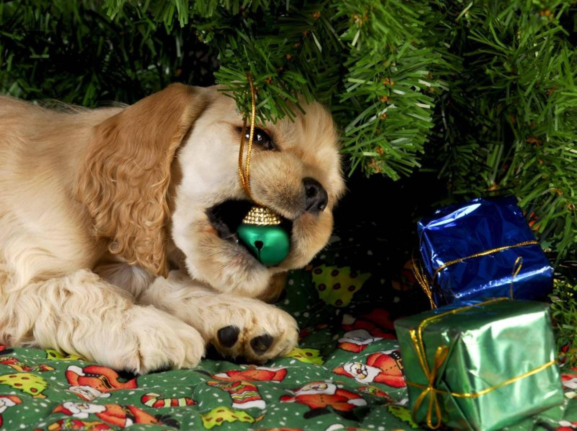 Weihnachtsdeko ist nichts für Hunde – Bild: Shutterstock / WilleeCole-Photography