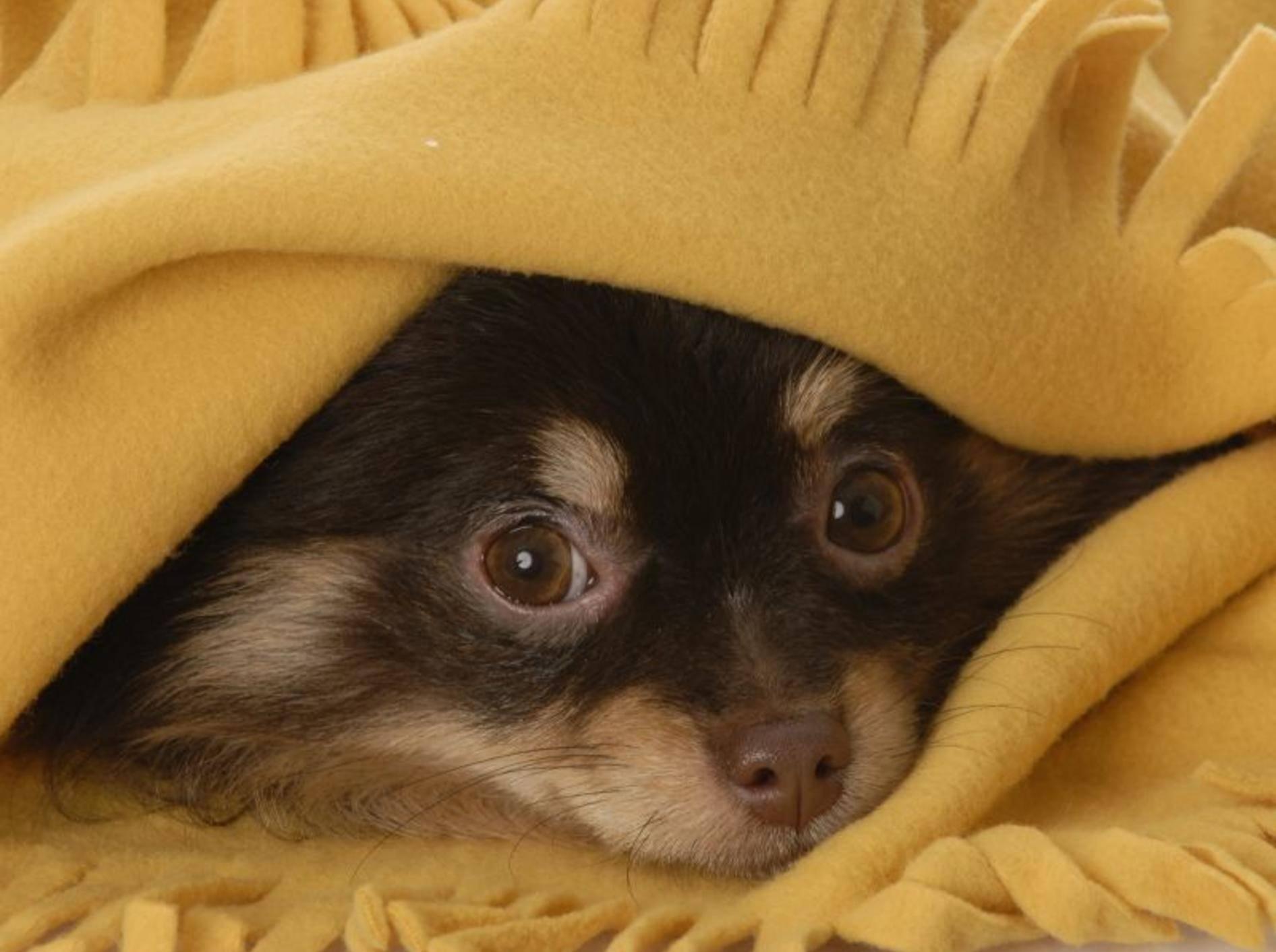 Hilfe für Hunde mit Angst vor Silvester – Bild: Shutterstock / WilleeCole Photography