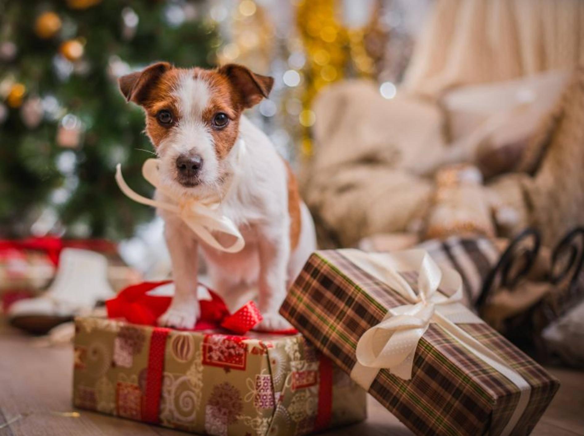 Schöner Weihnachtsspaß: Geschenke für Hunde – Bild: Shutterstock / dezi