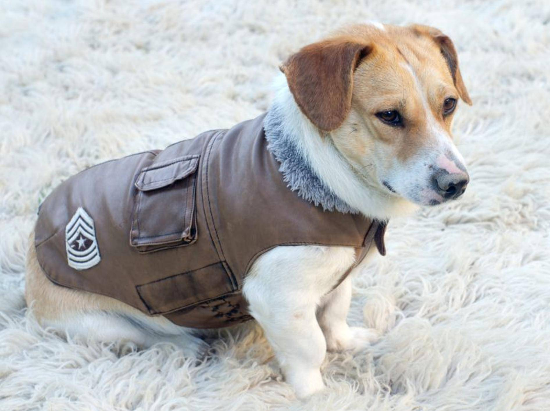 Für kalte Tage: Wintermantel für Hunde – Bild: Shutterstock / Budimir Jevtic
