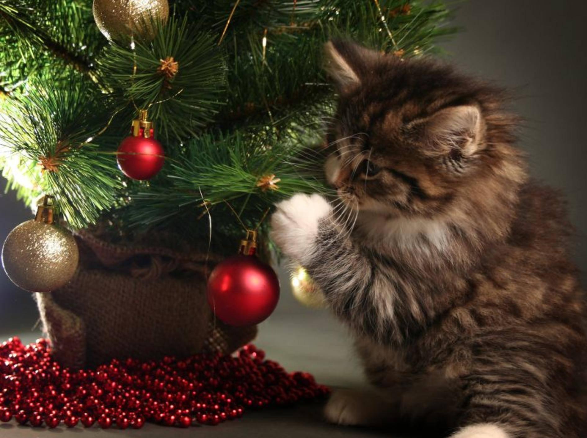 Lametta und andere Weihnachtsdeko kann Katzen gefährlich werden – Bild: Shutterstock / Lisa A.
