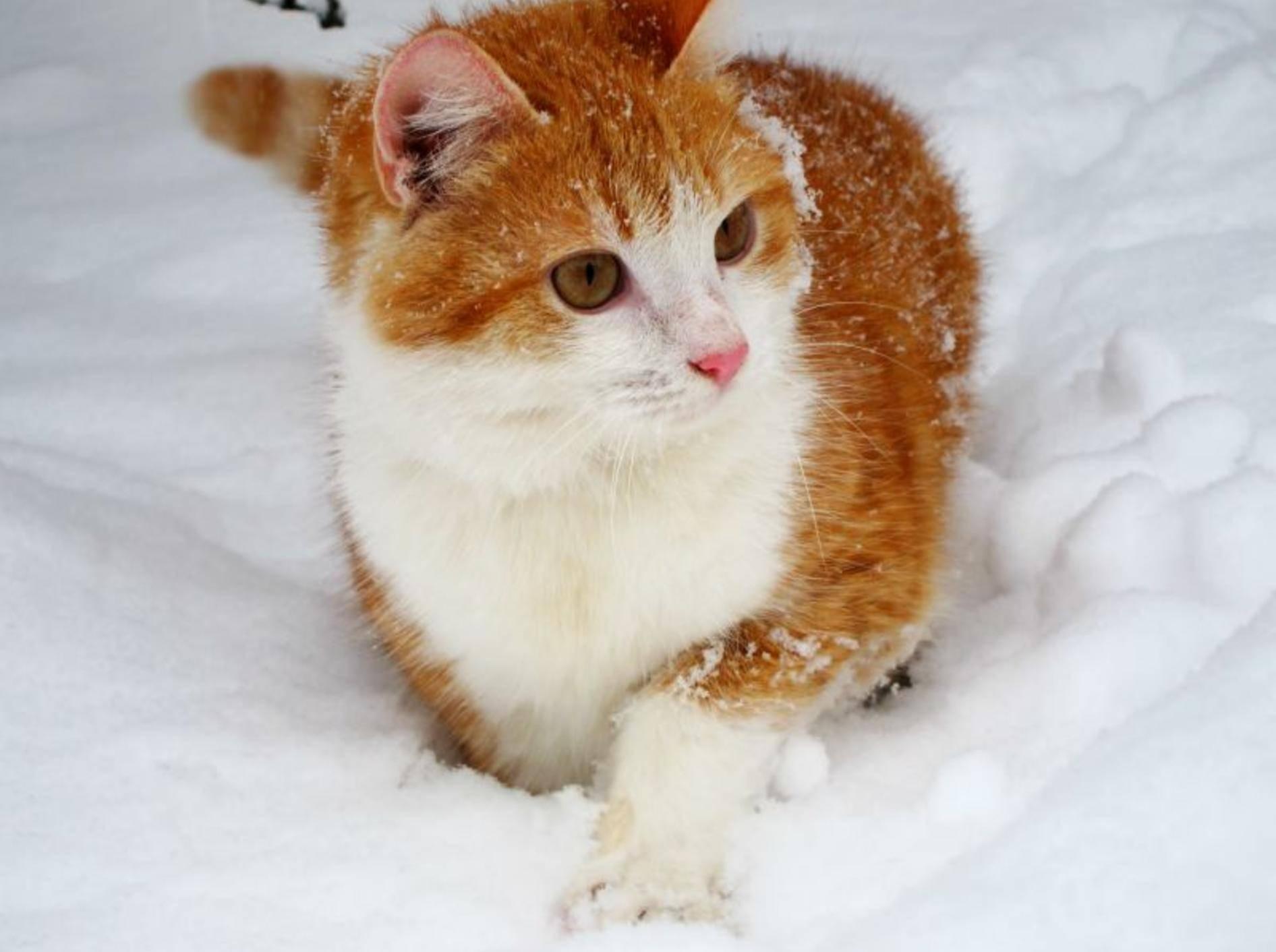Ein geschützes Plätzchen und eine kleine Stärkung: Für Struner im Winter ein Segen – Bild: Shutterstock / Roman Prishenko