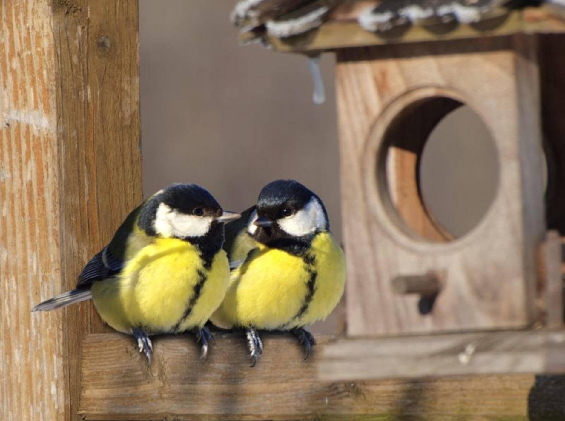 Eine schön gepflegte Futterstelle hilft Vögeln, den Winter gut zu überstehen – Bild: Shutterstock / gorillaimages