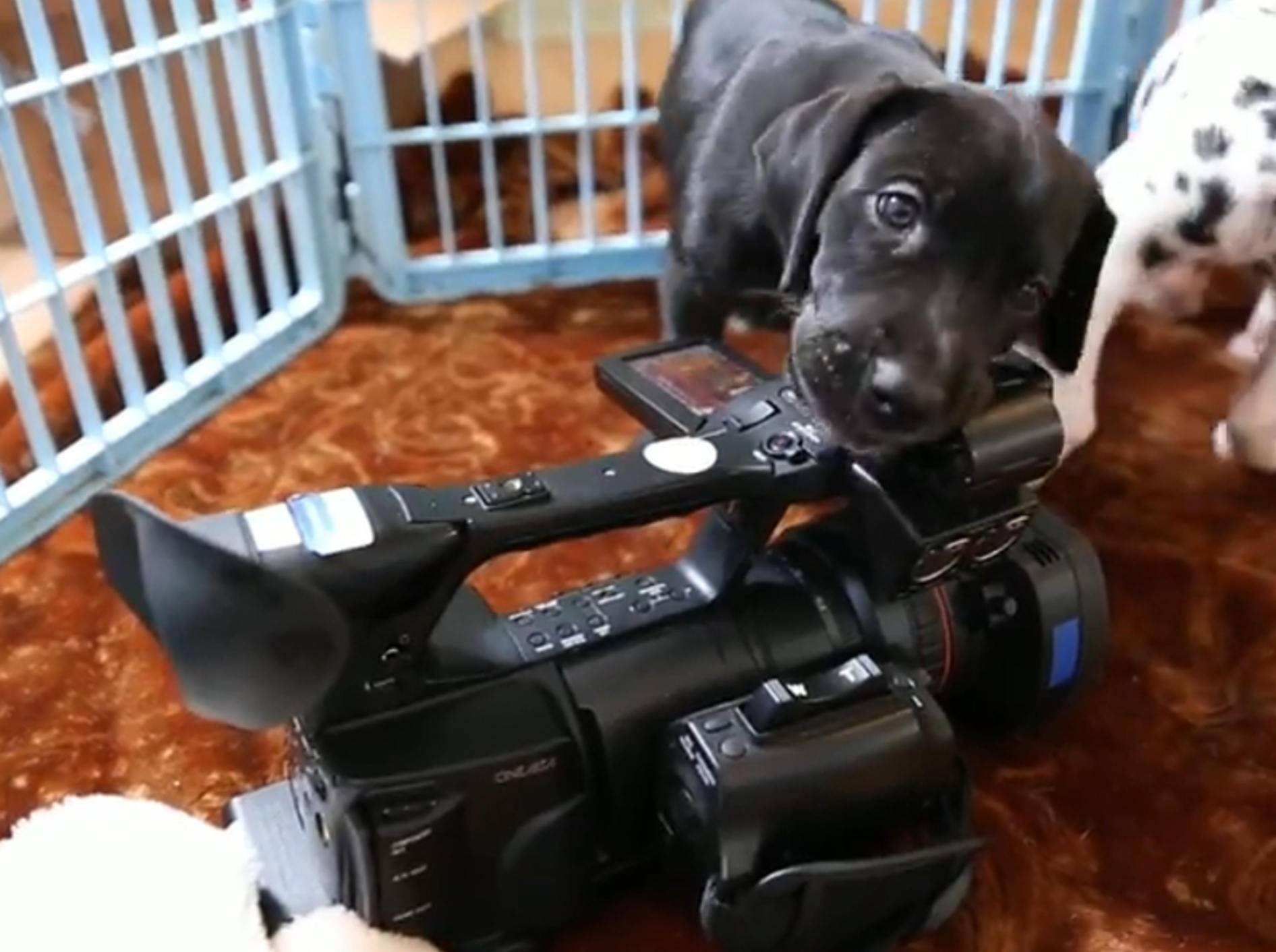 Süße Hundewelpen lieben Kamera – Bild: YouTube / The Pet Collective