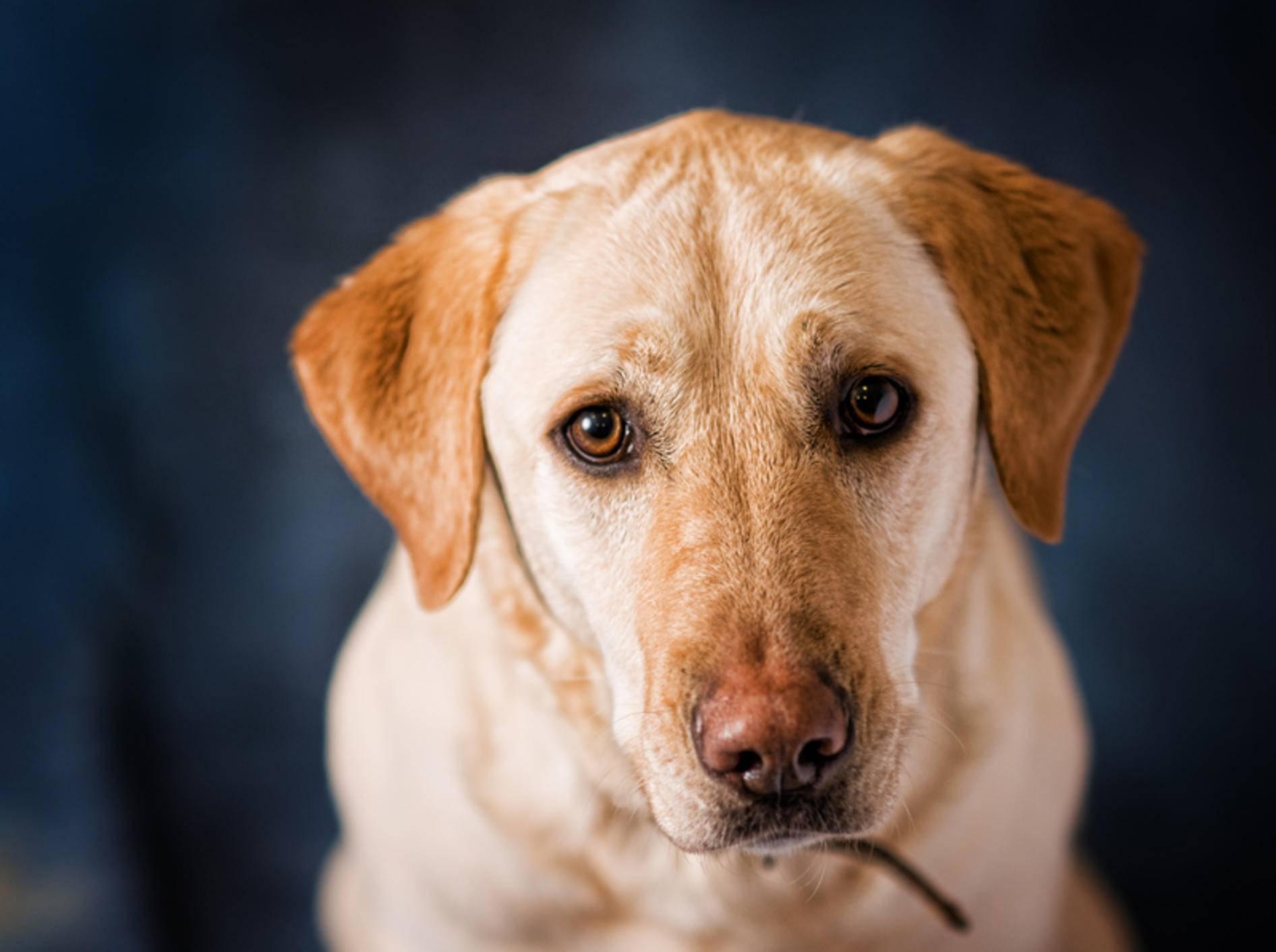 Eine Verstopfung ist für den Hund sehr unangenehm – Bild: Shutterstock / sianc