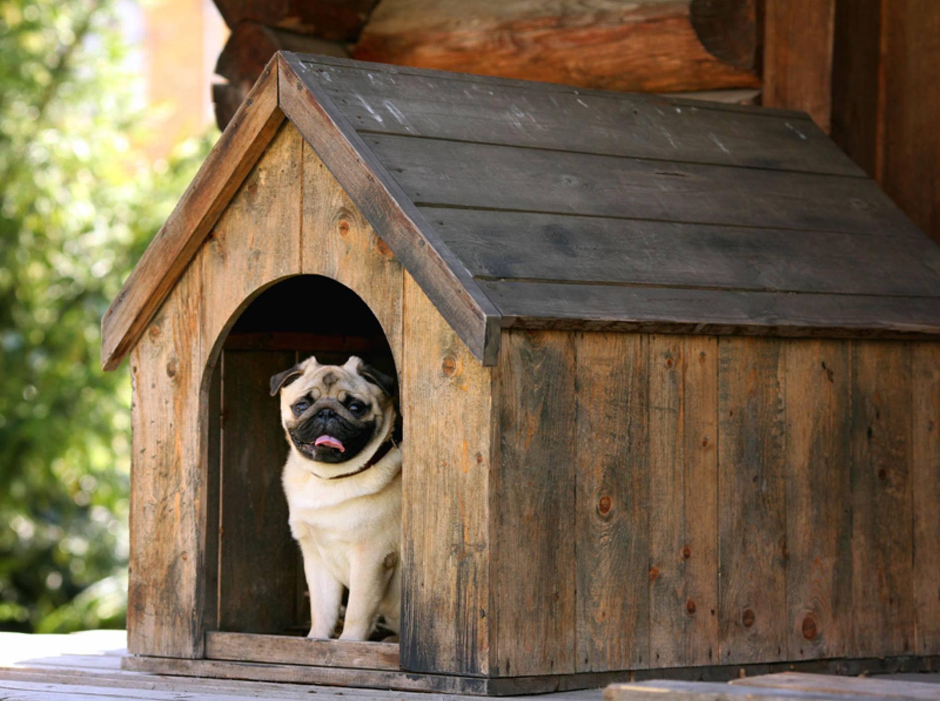 Eine bequeme Hundehütte ist für Hunde draußen unverzichtbar – Bild: Shutterstock / Kichigin